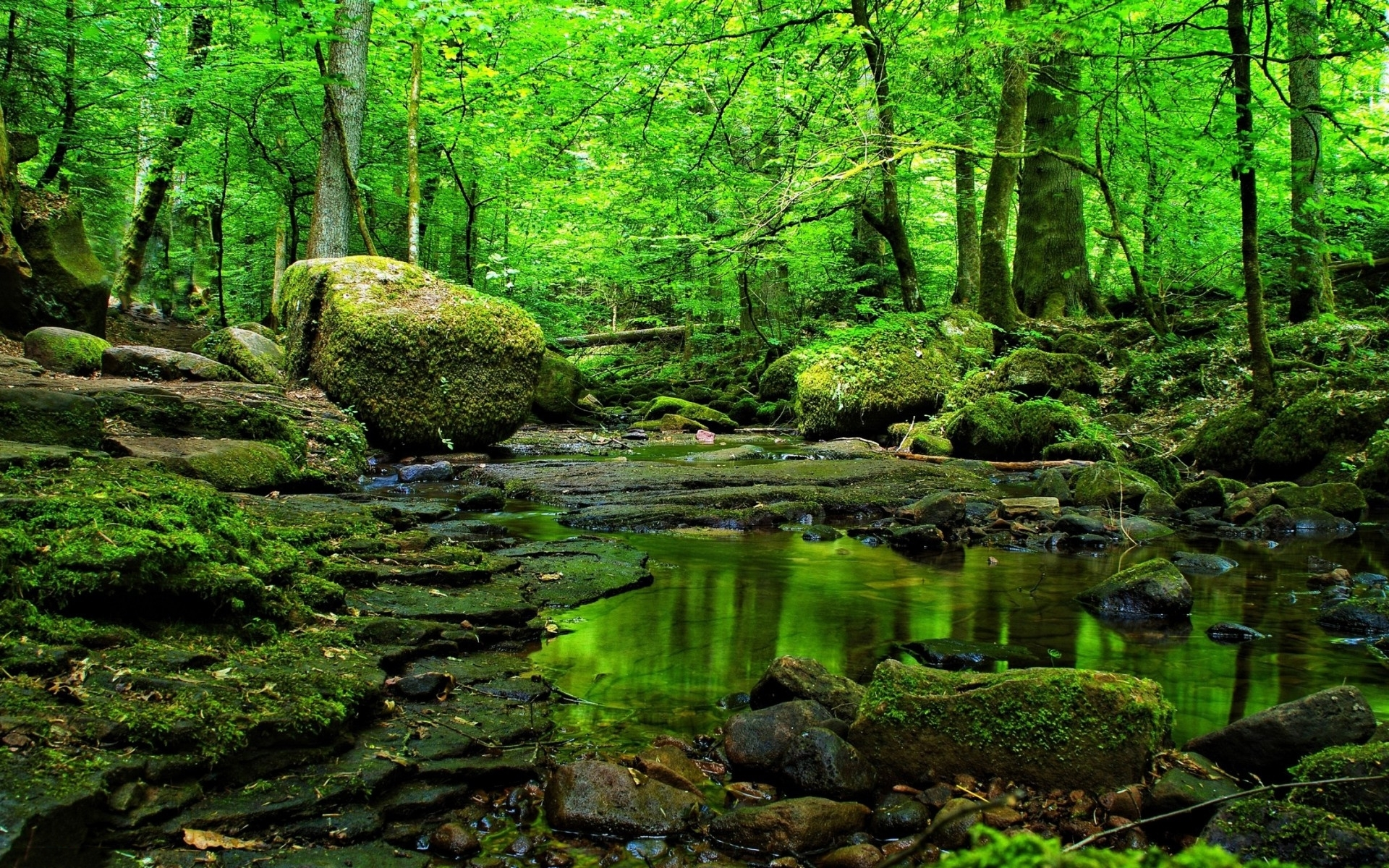 green forest wallpapere rocks iarba green forest apa rocks iarba green forest
