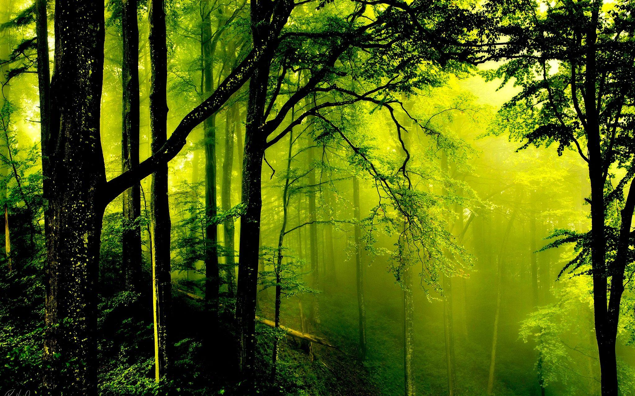 Green Forest Wallpaper | 2048x1280 | ID:48891 - WallpaperVortex.com