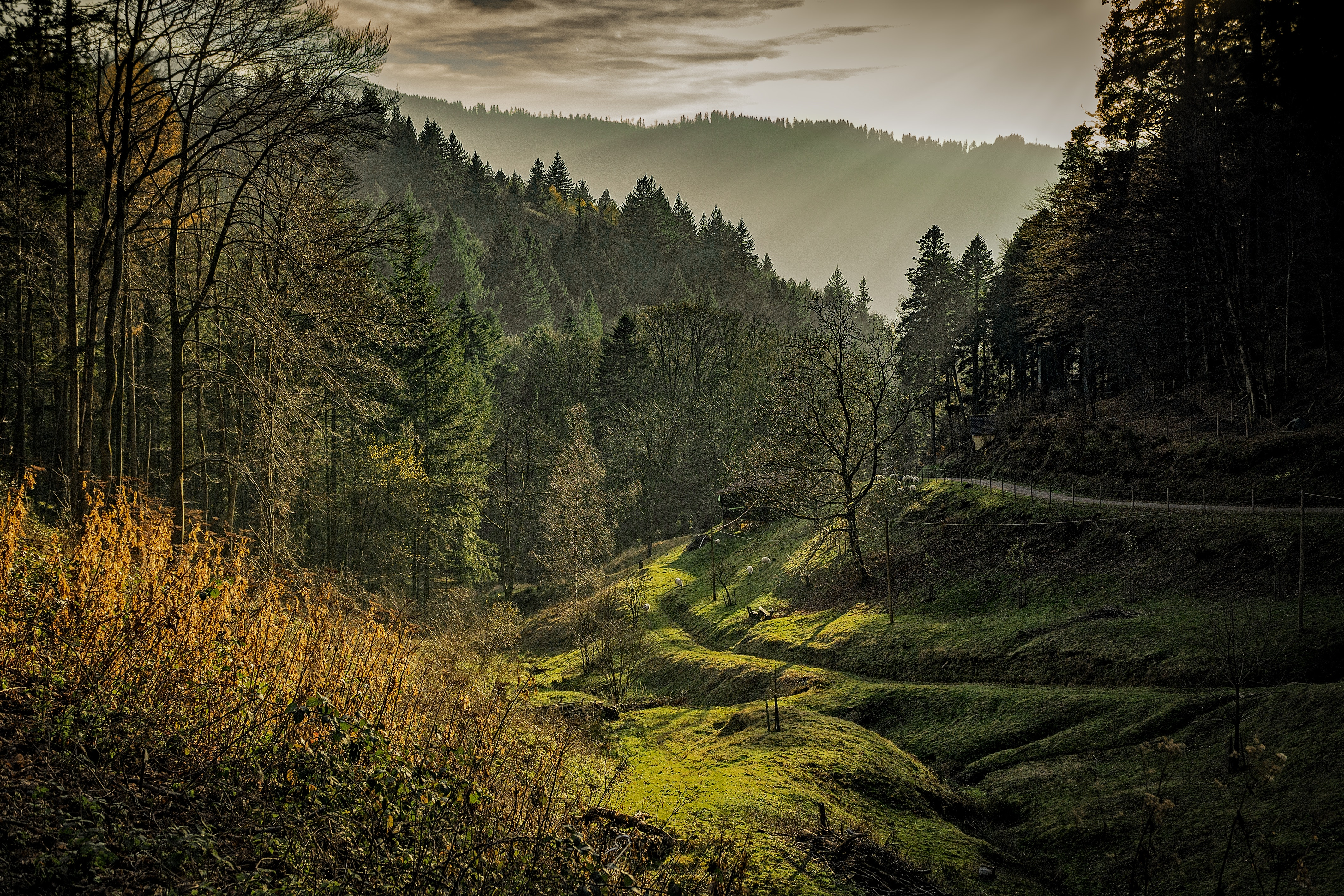 Green Forest Taken during Sunrise, Scenic, Outdoors, Nature, Sun, HQ Photo