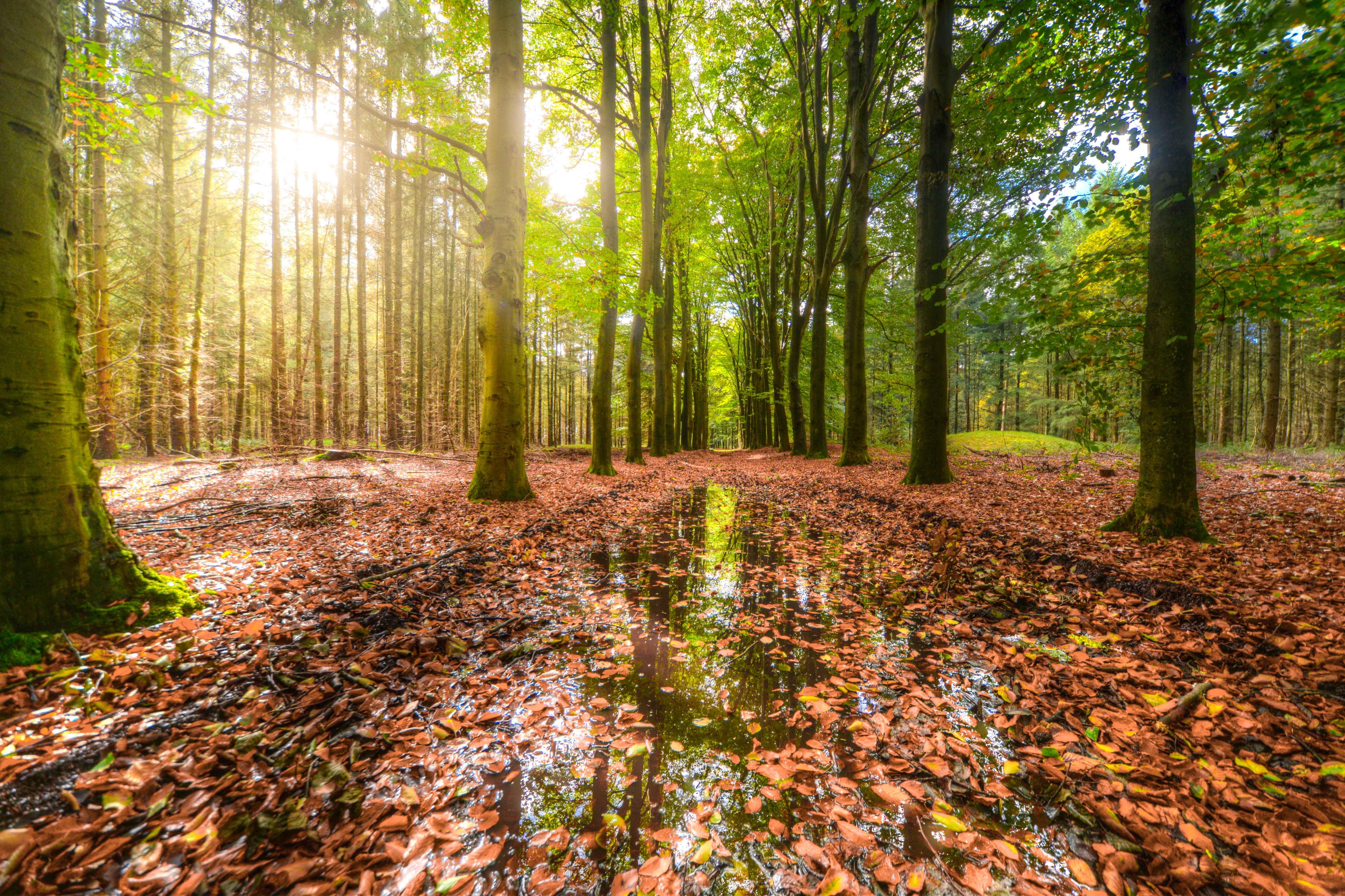 Green Forest With Body of Water Covered With Brown Dried Leaves, Reflections, Scenery, Pathway, Park, HQ Photo