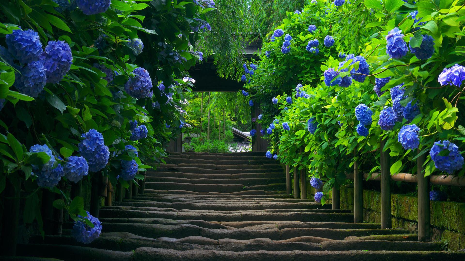 Free Photo Green Garden