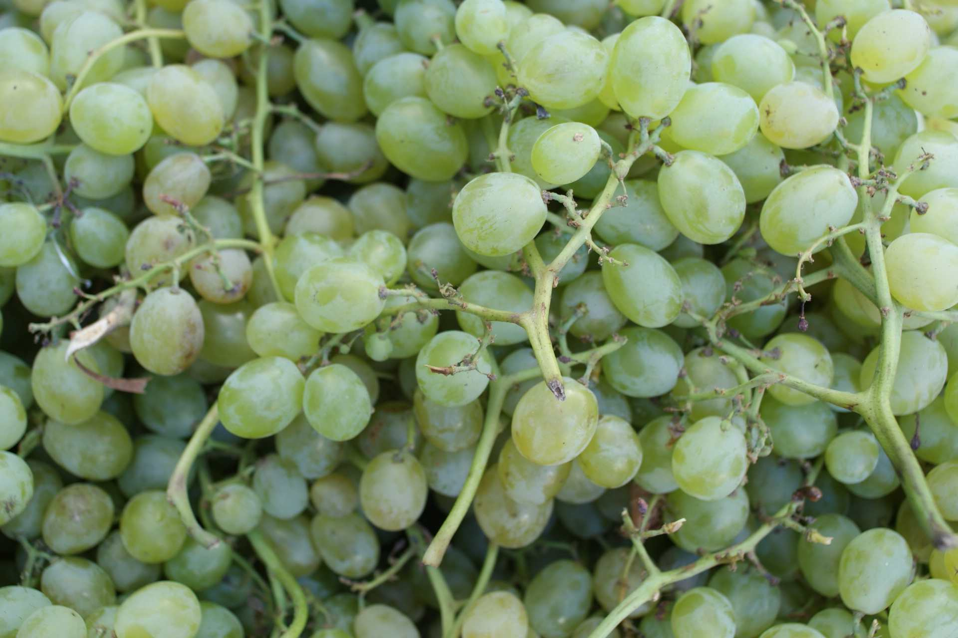 Beyond Red and Green Grapes — Grape Varieties