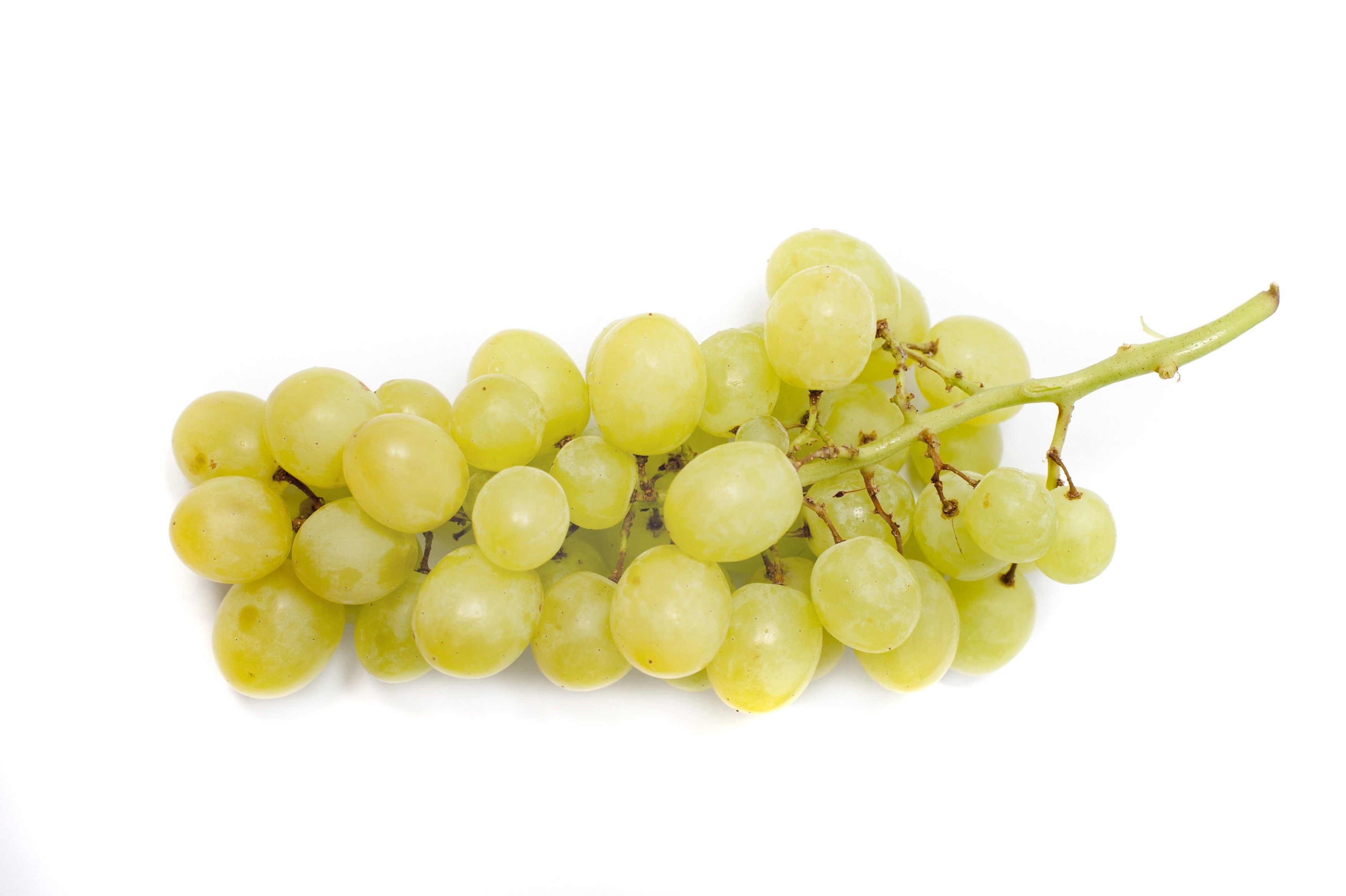 Bunch of fresh green grapes - Free Stock Image