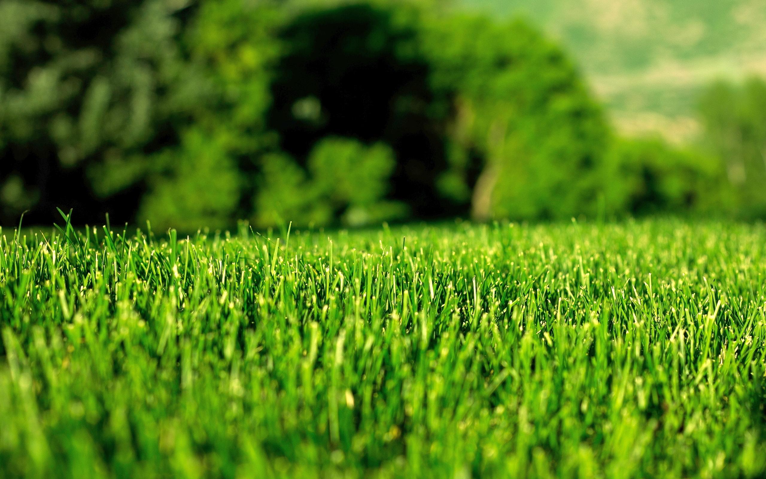 Blog - Green Grass Solutions