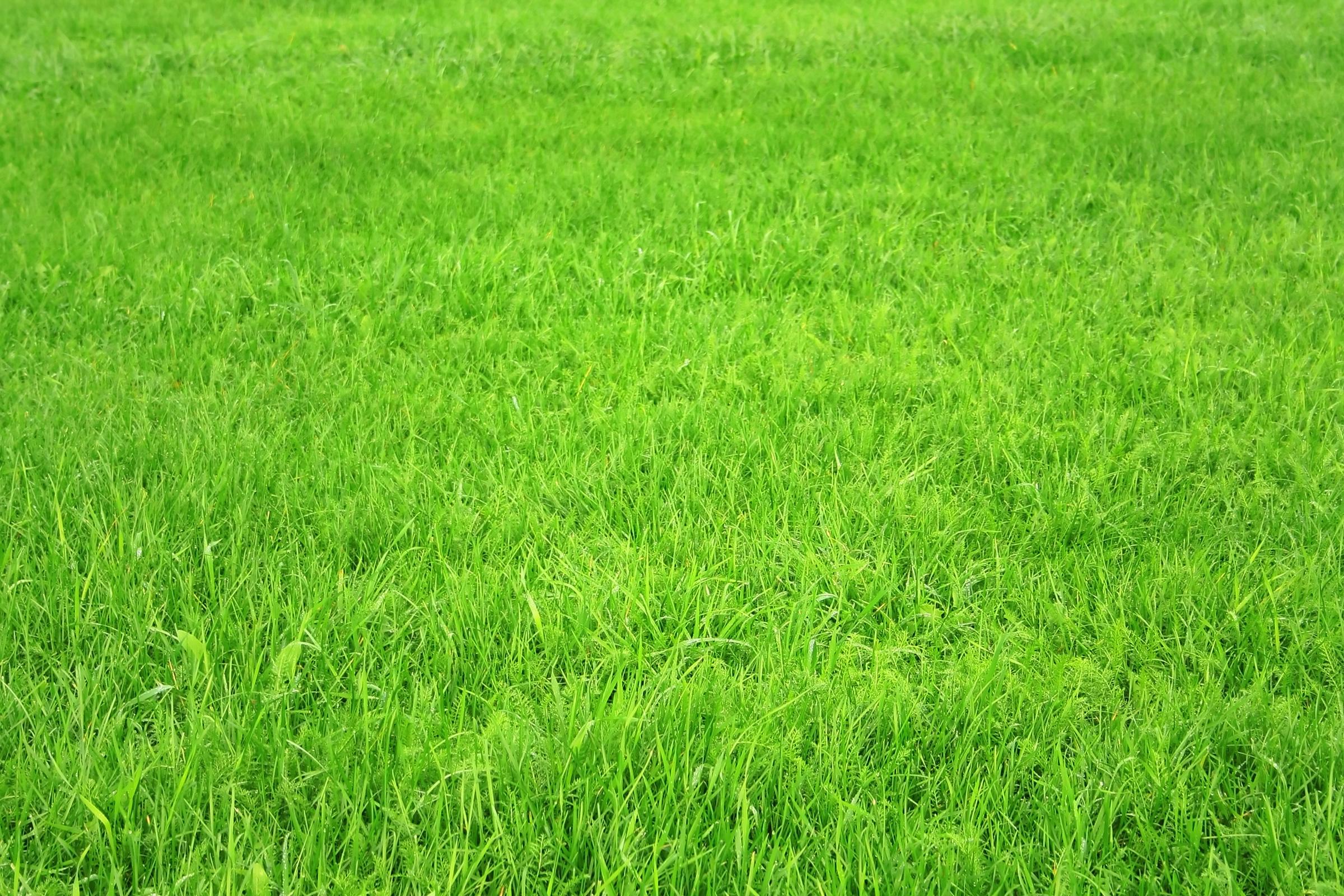 Download wallpaper: green Grass, texture grass, desktop wallpapers