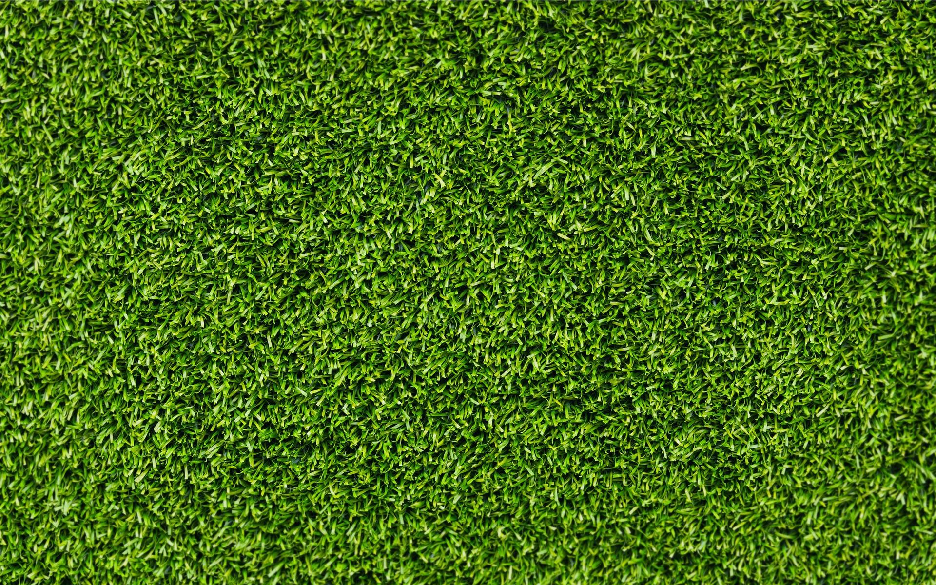 Image - Green-grass.jpg | Quidditch Wiki | FANDOM powered by Wikia