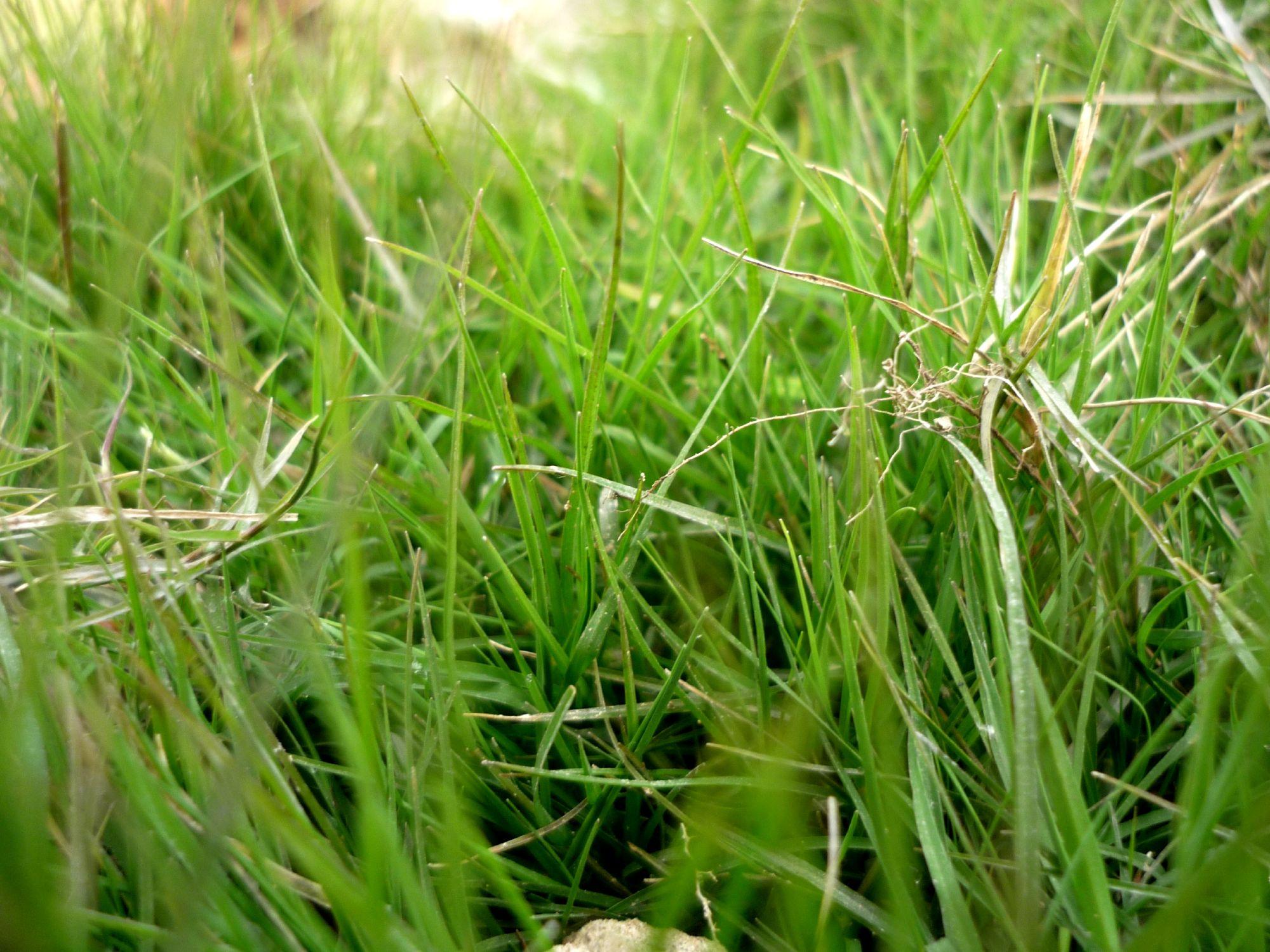 Green Grass, Garden, Grass, Green, Ground, HQ Photo