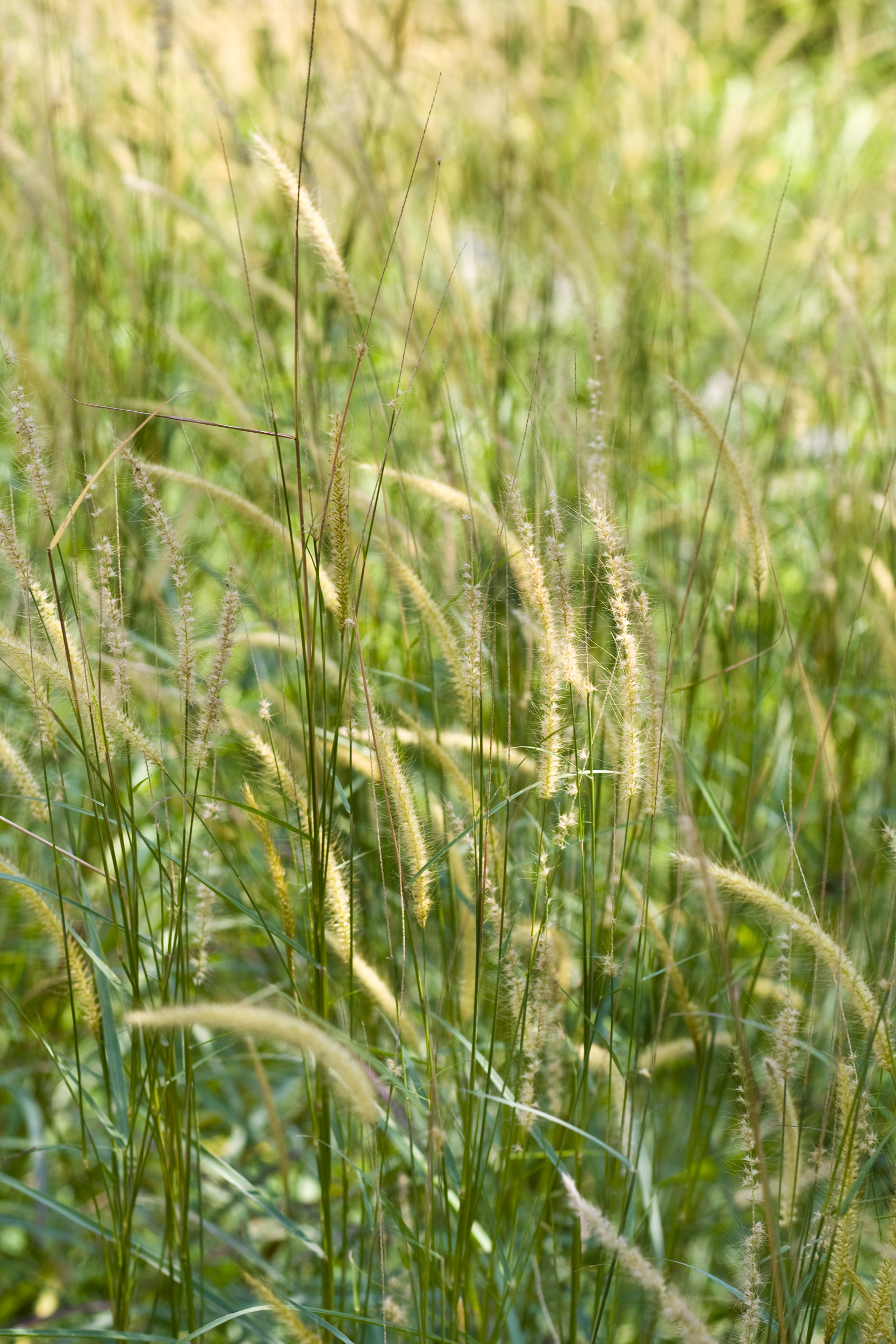 Green Grass, Agriculture, May, Nature, Nobody, HQ Photo