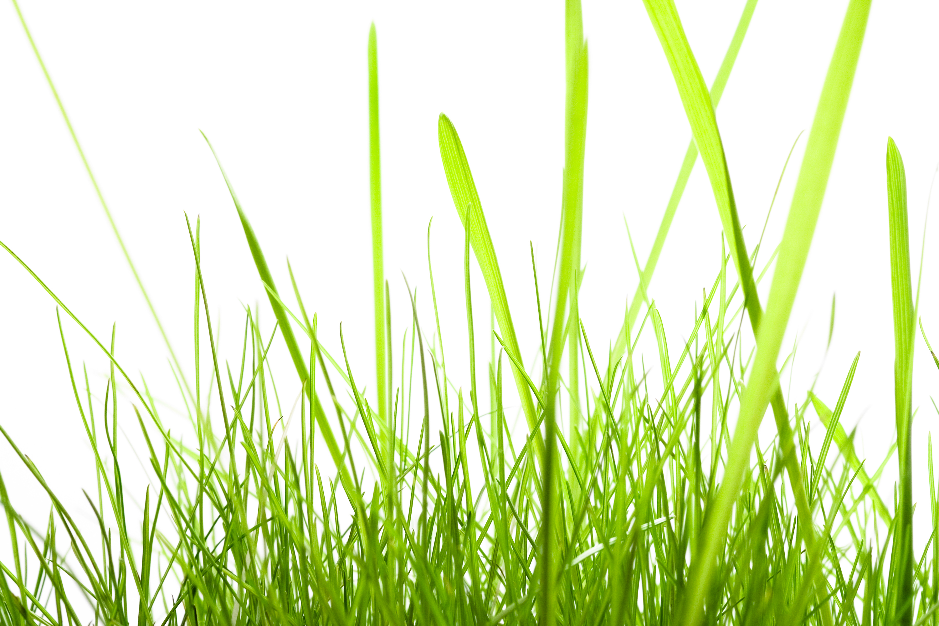 Green Grass, Plant, Nature, Outdoors, Spring, HQ Photo