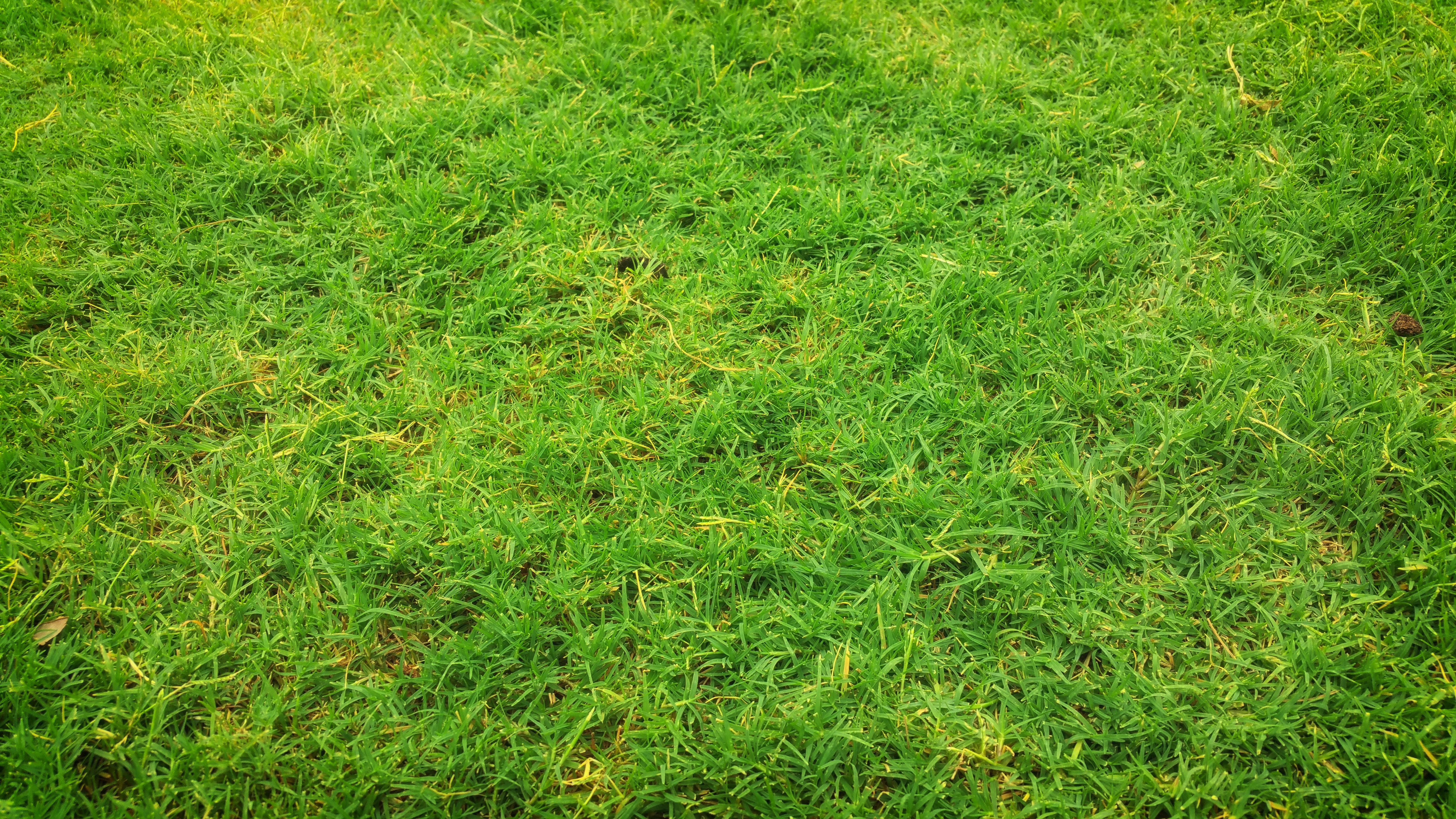 Green Grass, Field, Grass, Grass field, Grass land, HQ Photo