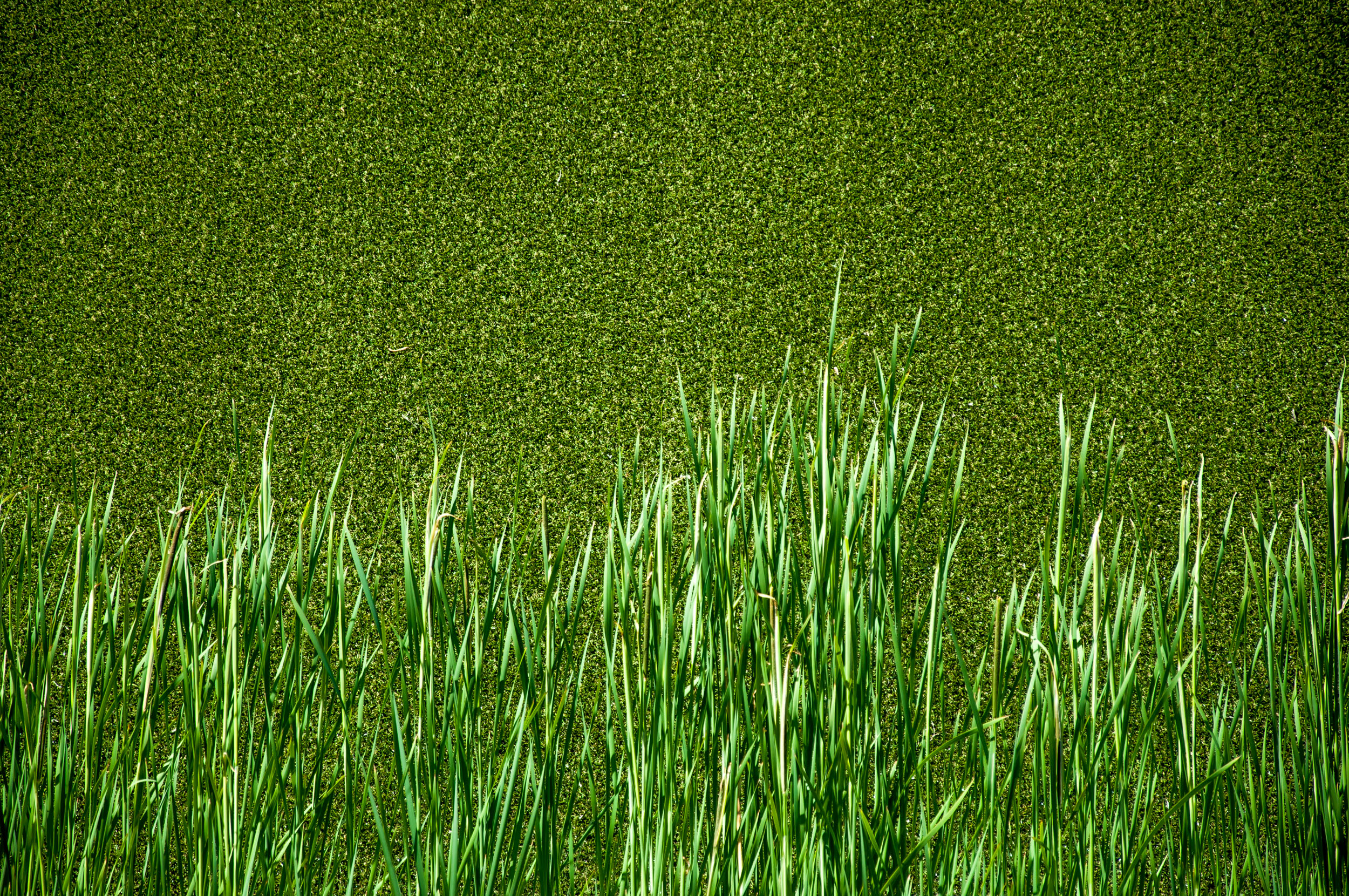 Green grass, Abstract, Lawn, Lifestyle, Lush, HQ Photo