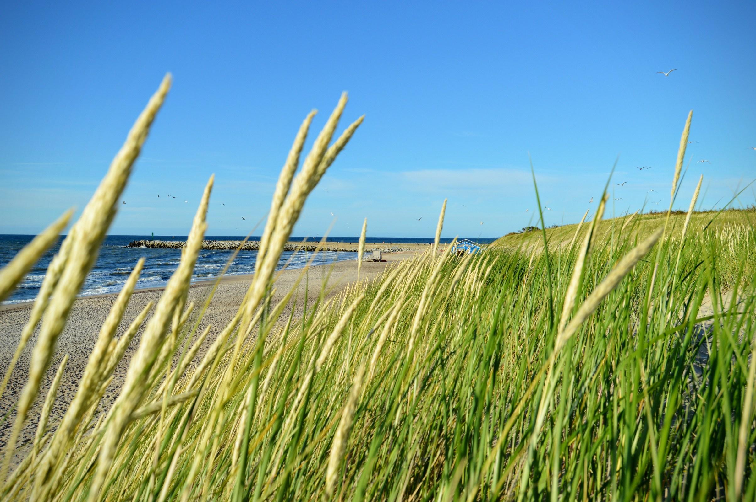 Green grass close-up on a sand dune photo