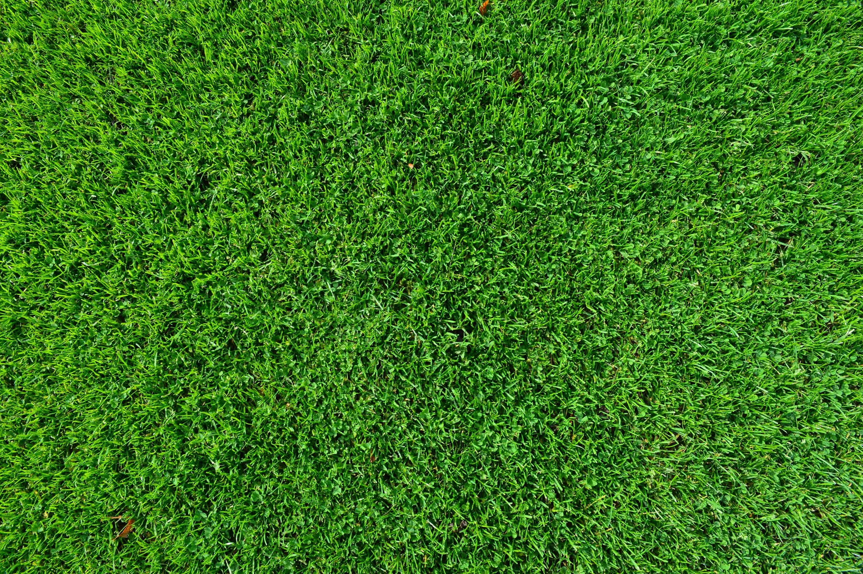 Free picture: leaf, grass, lawn, green grass, green, pattern, plant