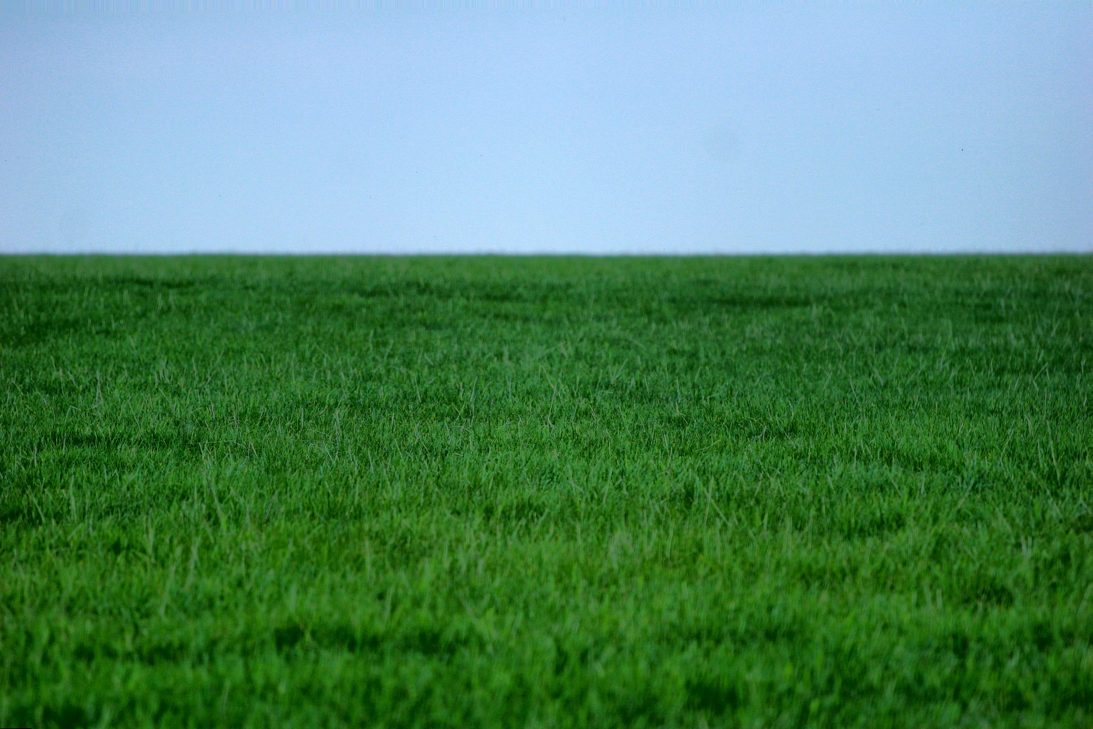 Green grass lawn photo