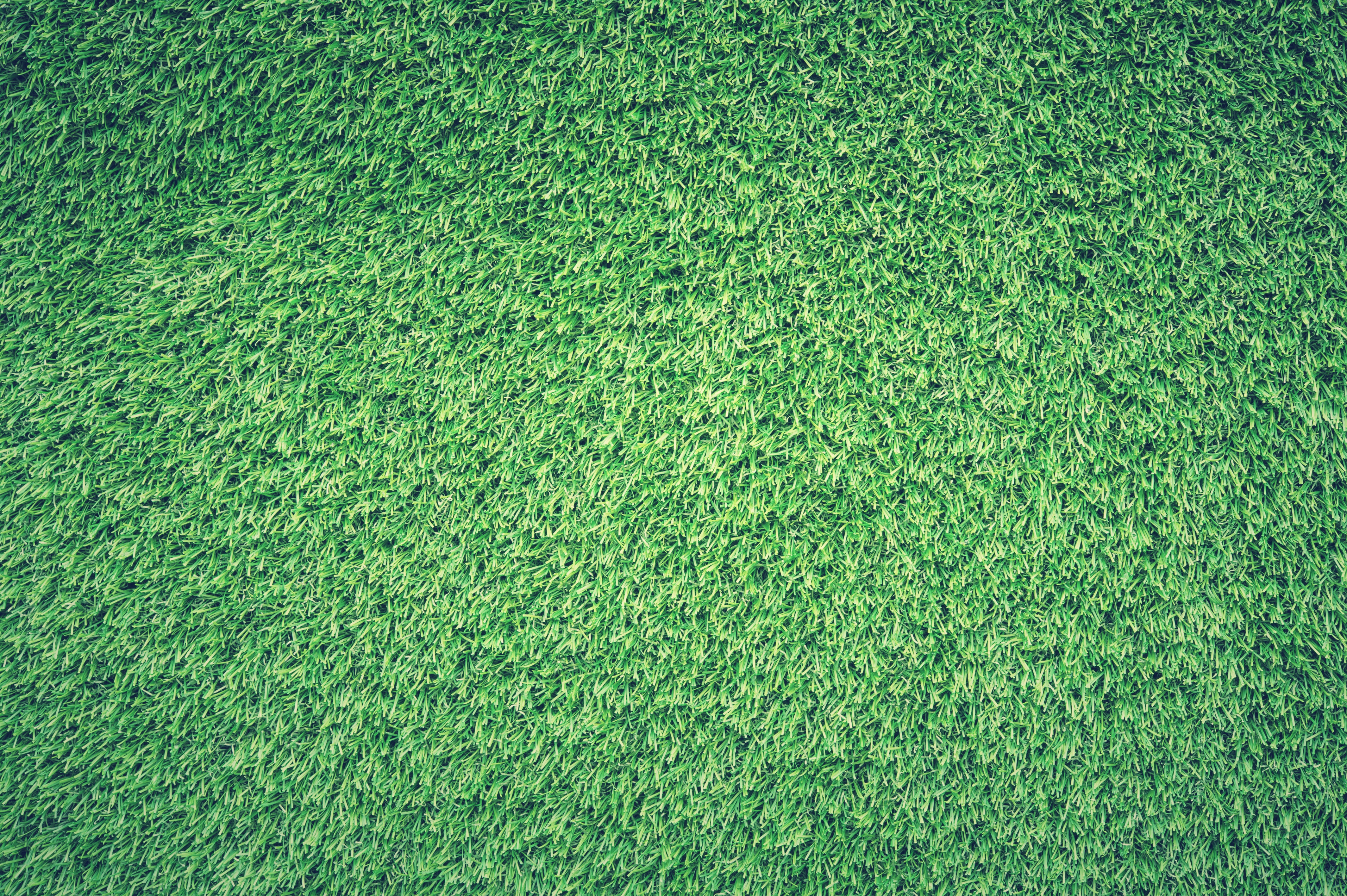 Green Grass Lawn, Texture, Lawn, Green, Grass, HQ Photo
