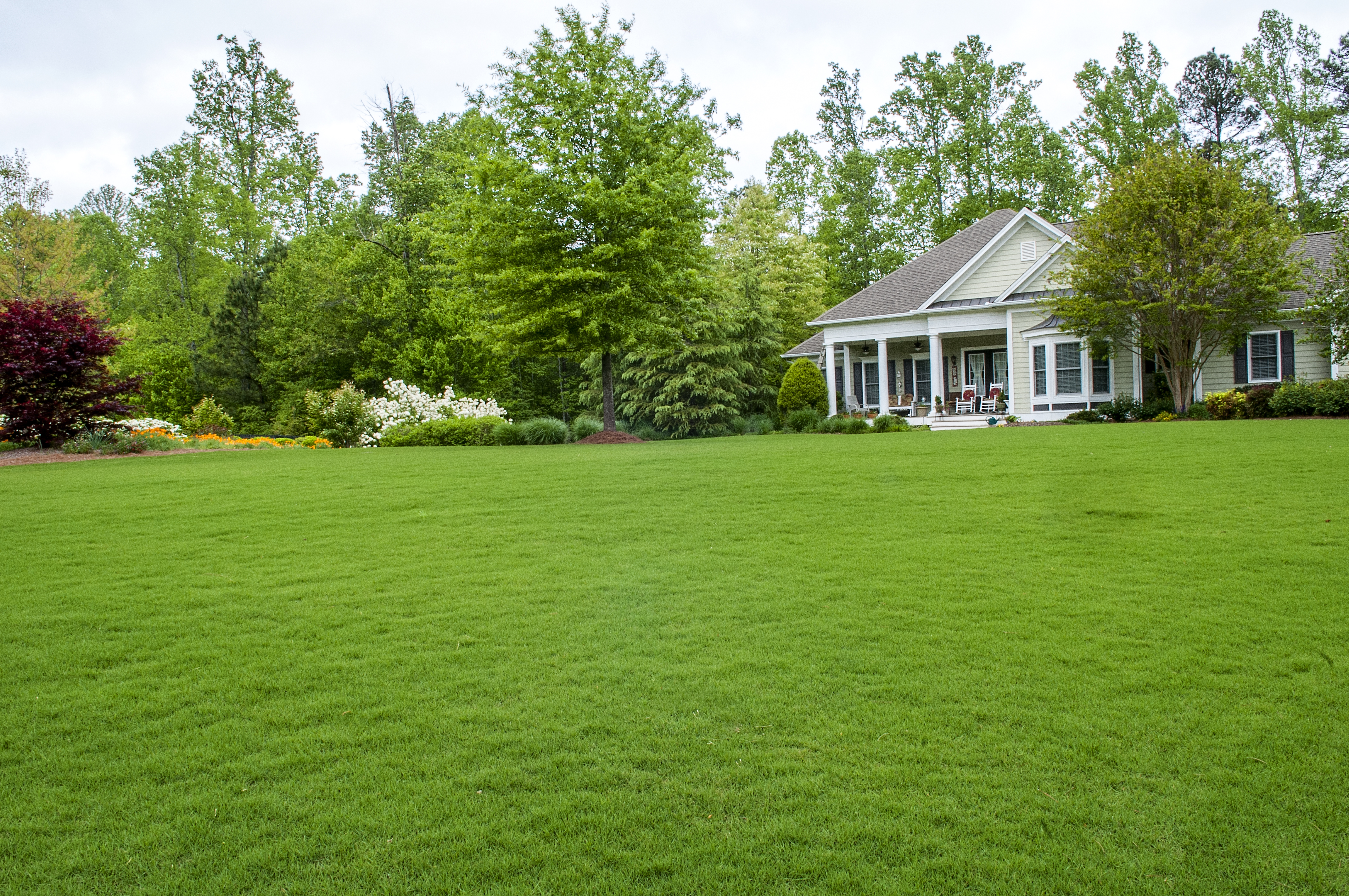 Lawn Care Tips - Frisella Nursery
