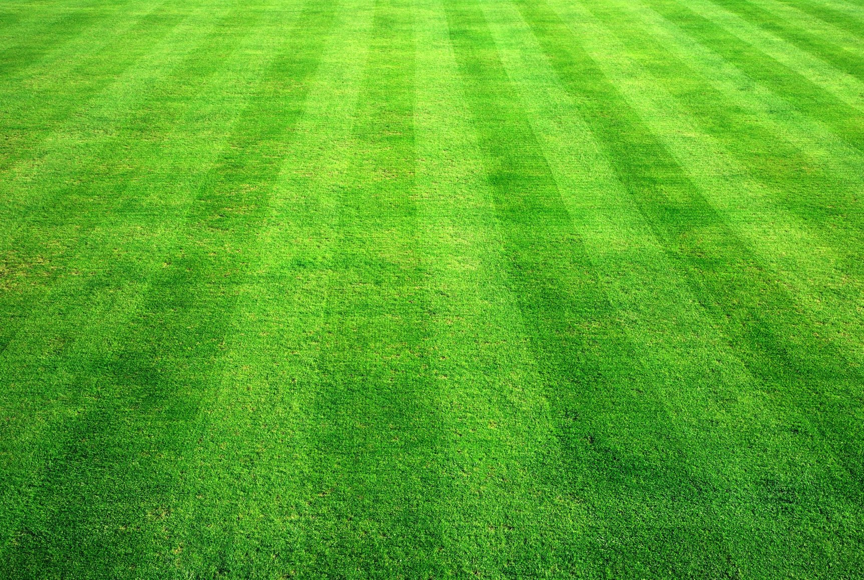 Bowling green grass background. - Stone Age Landscaping