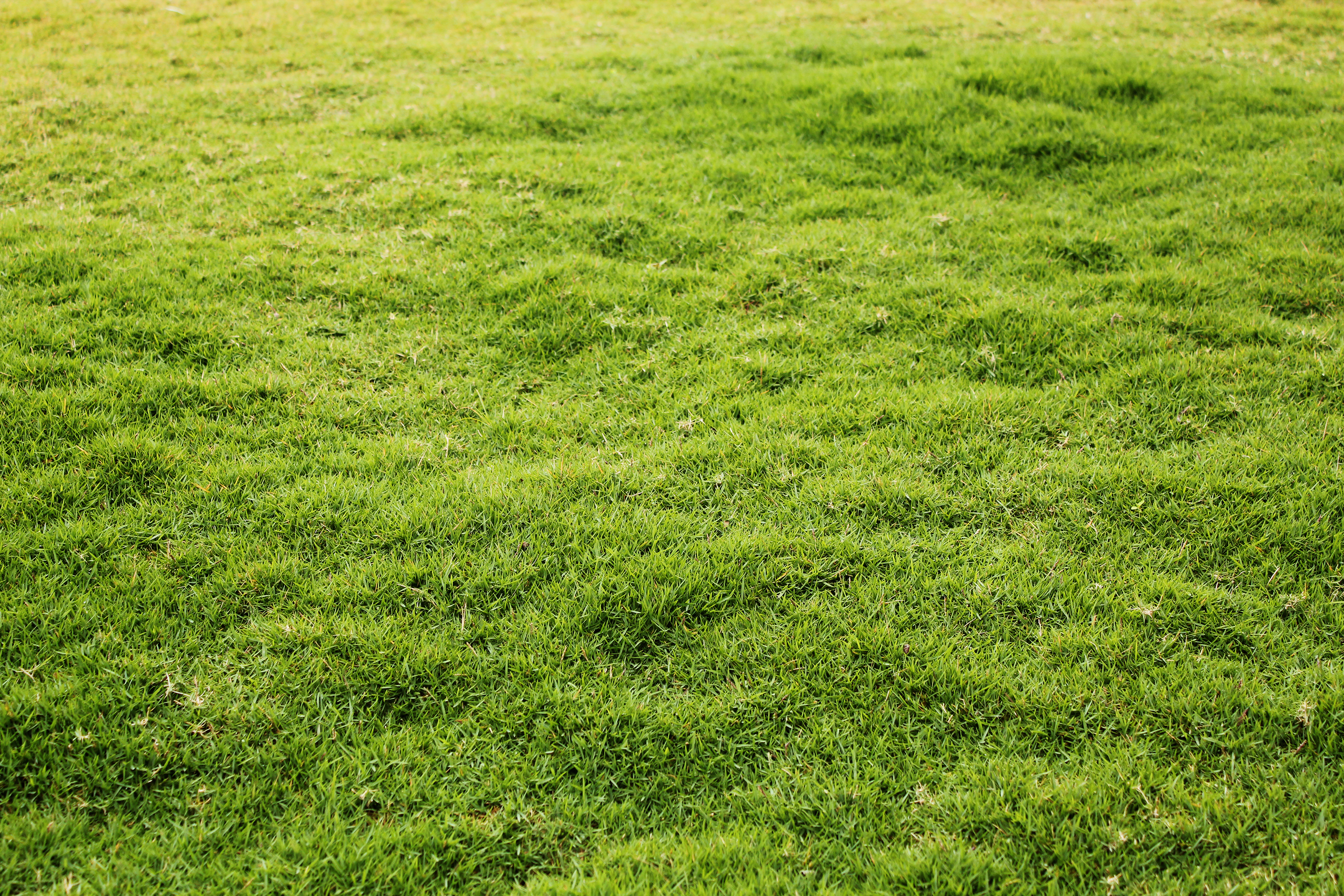 Verdant And Lush Lawn Made Of Green Grass Download Links Free - Dunneiv