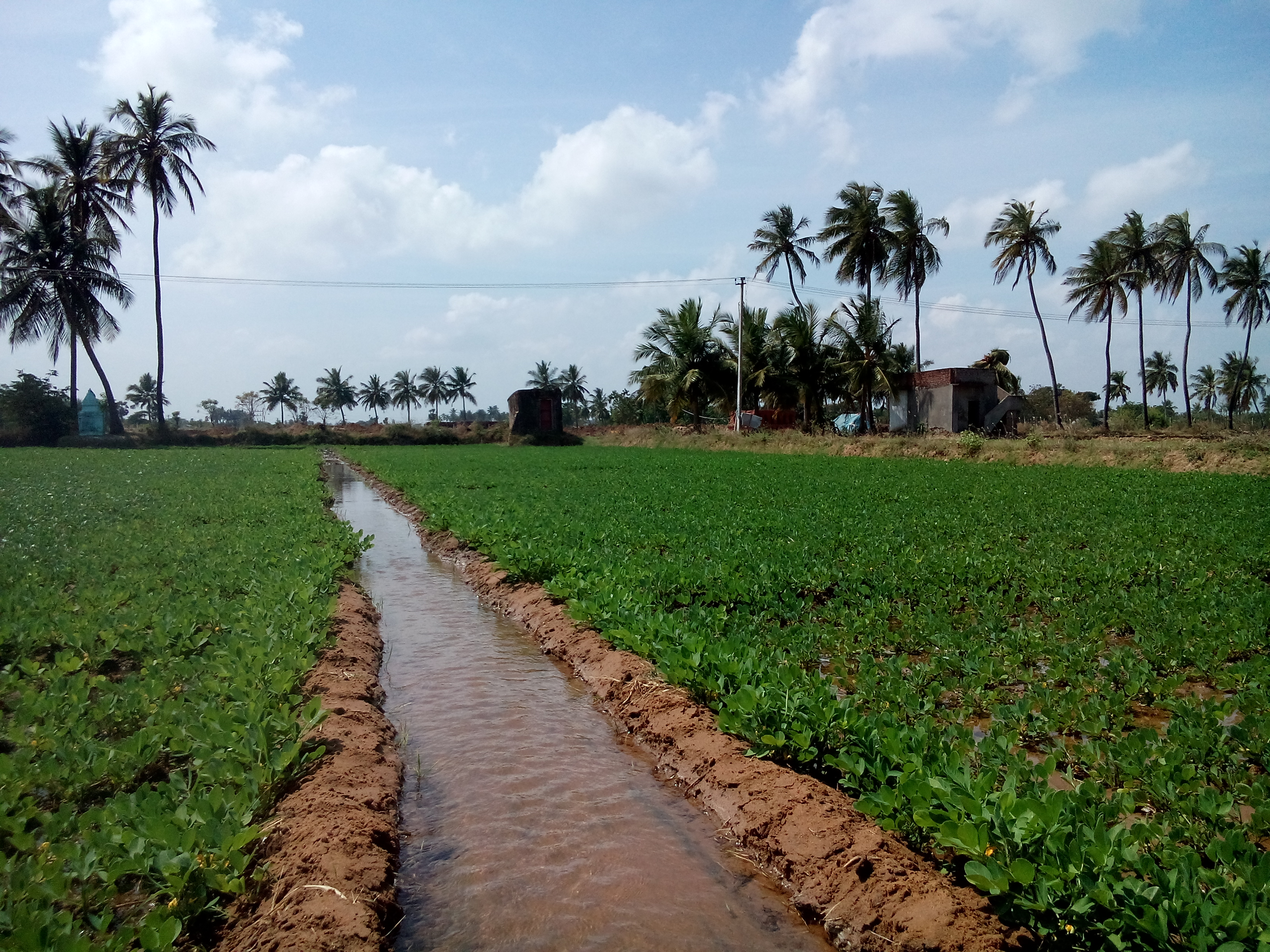 File:Peanuts ditch irrigation inid india.jpg - Wikimedia Commons