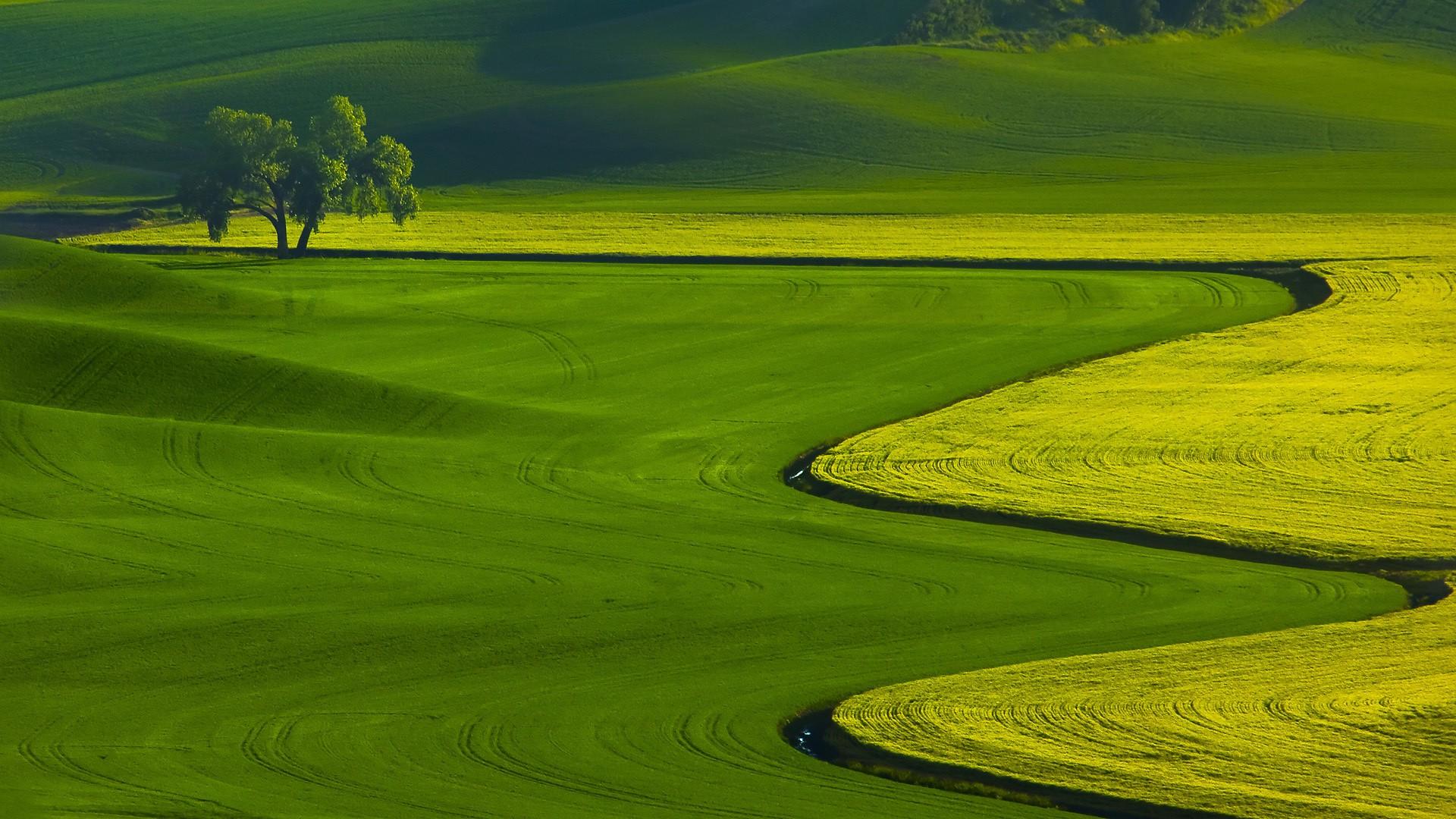 Green Landscape widescreen wallpaper | Wide-Wallpapers.NET