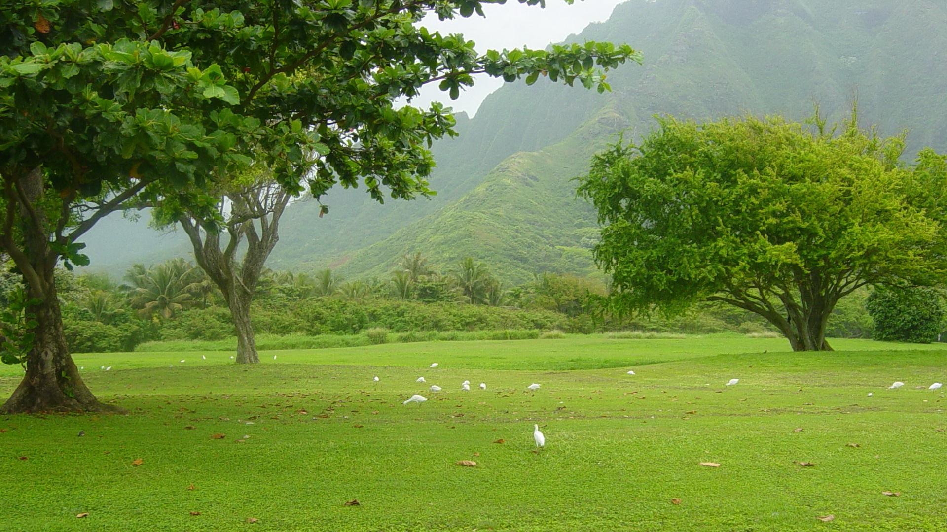 Green Landscape Wallpapers, Top HD Green Landscape Backgrounds, #VEJ ...