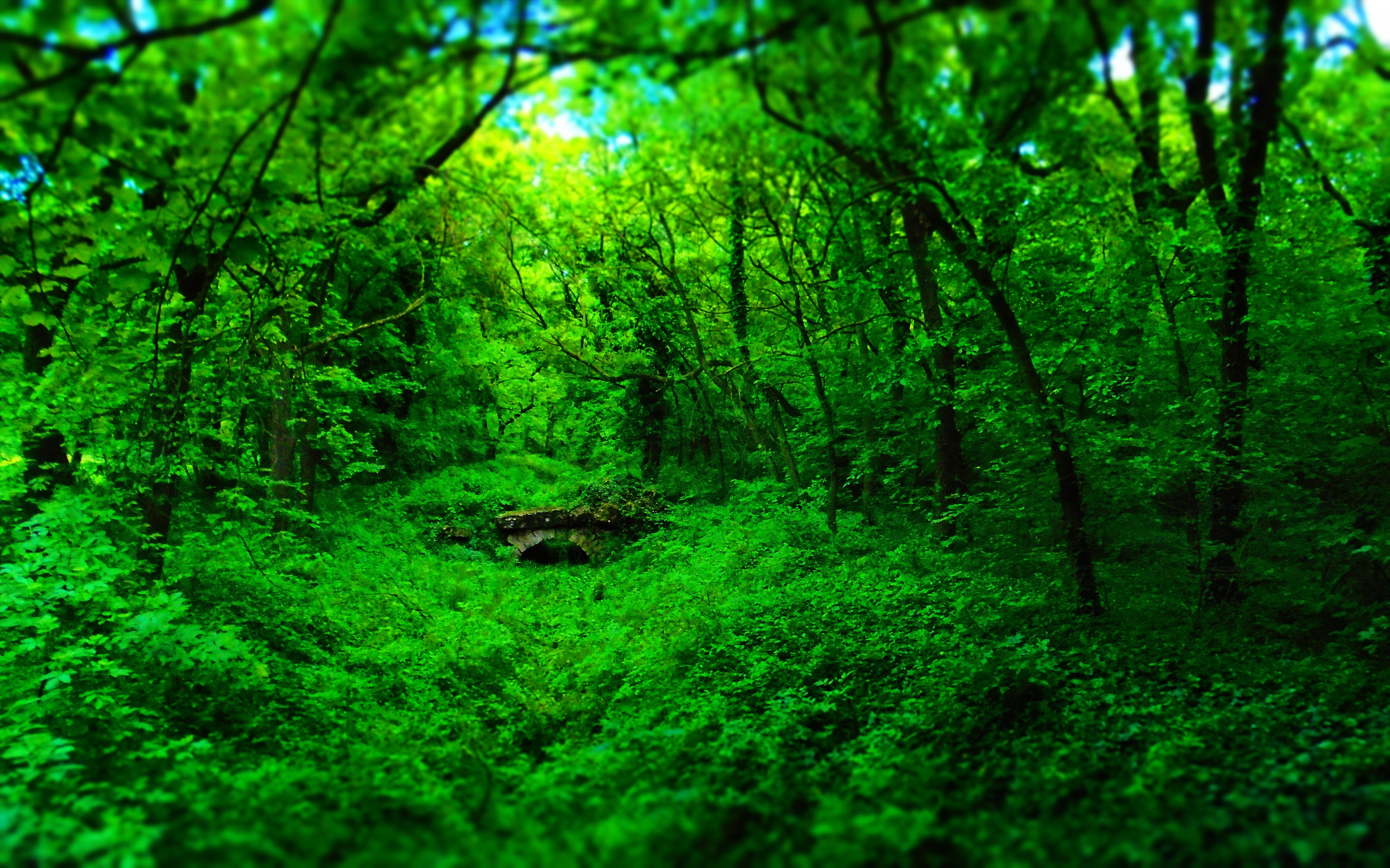 forest, Nature, Wood, Bridge, Green, Landscape Wallpapers HD ...