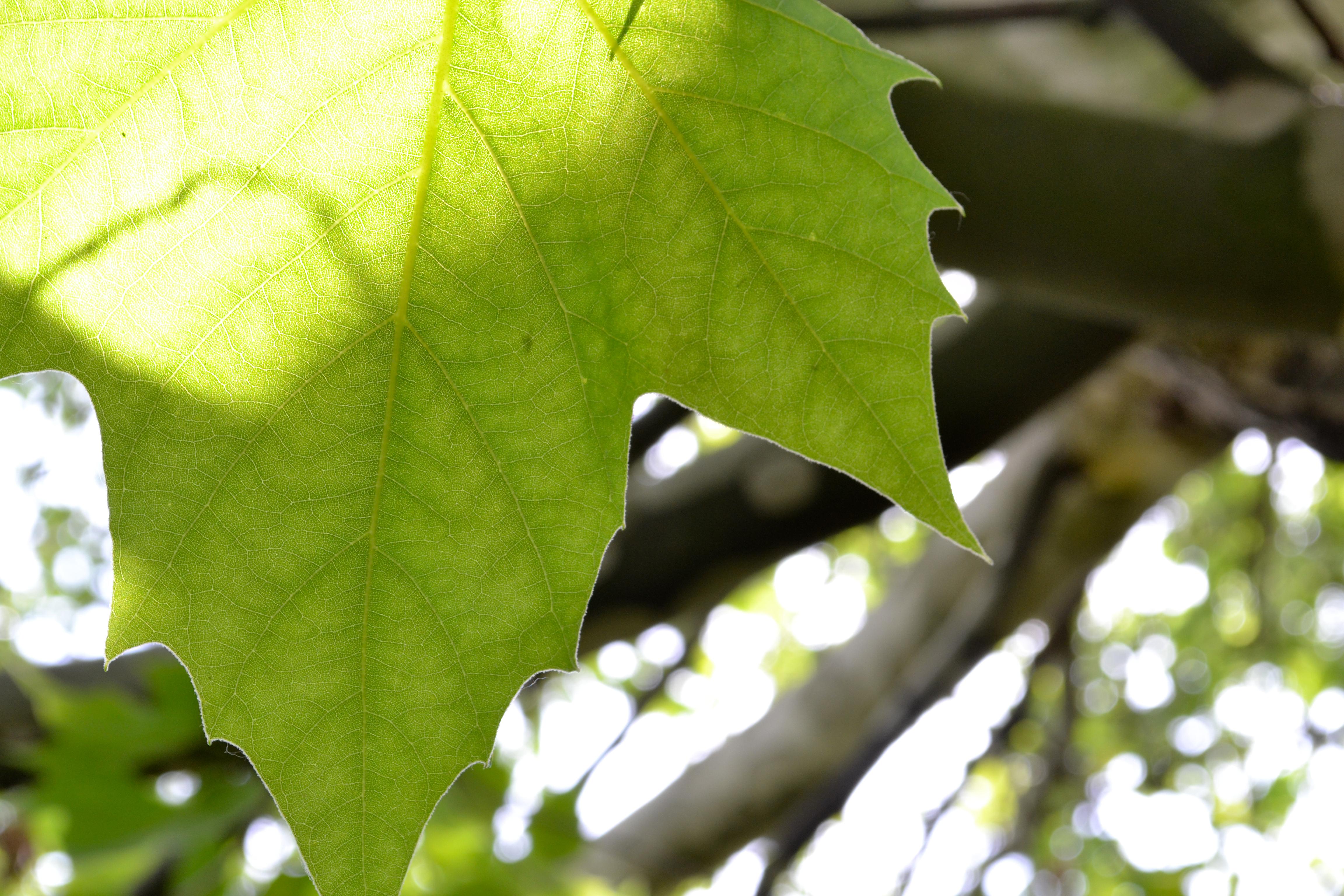 Green leaf photo