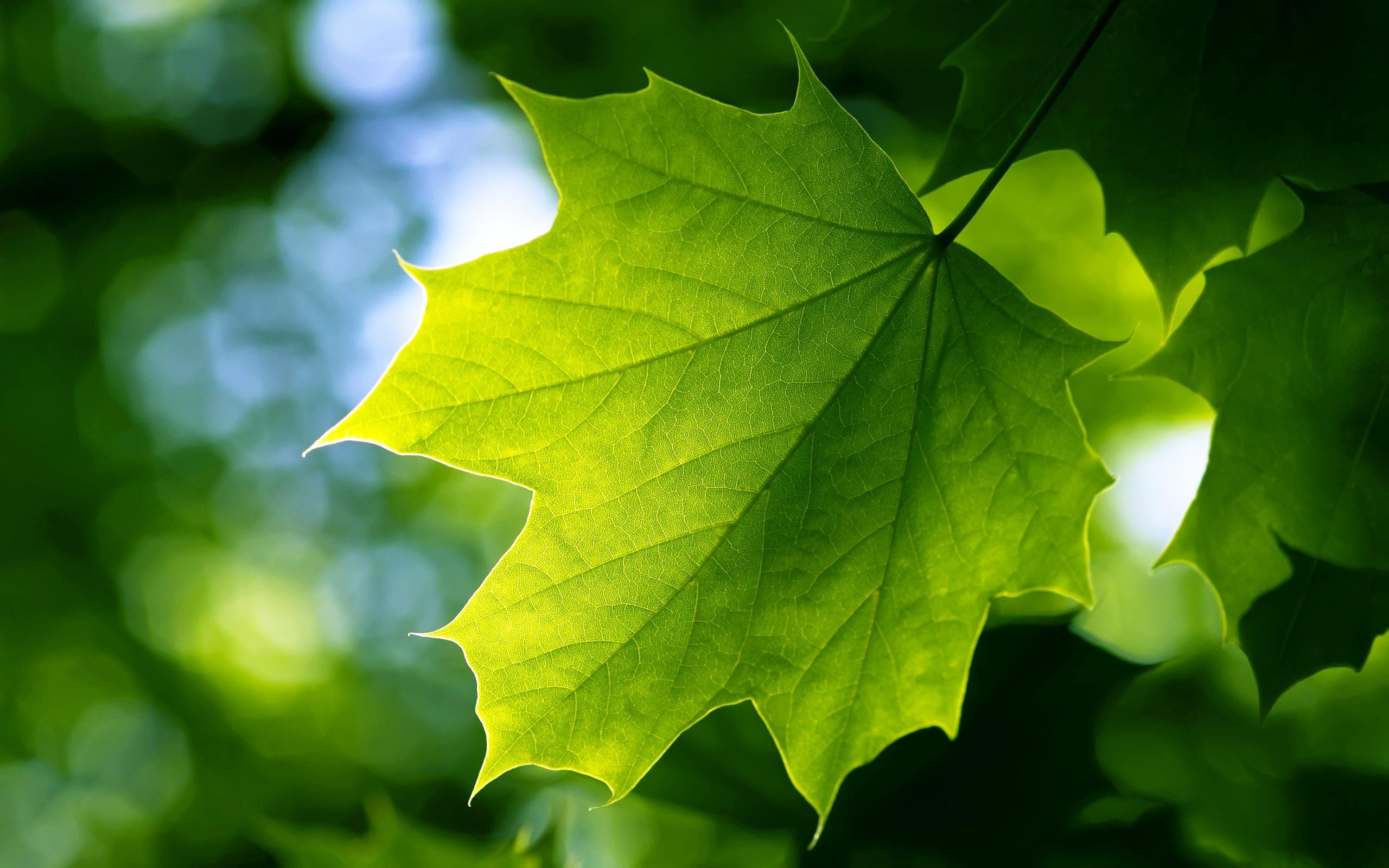 Green Leaf : 7 Green Leaf Landscaping | Biological Science Picture ...