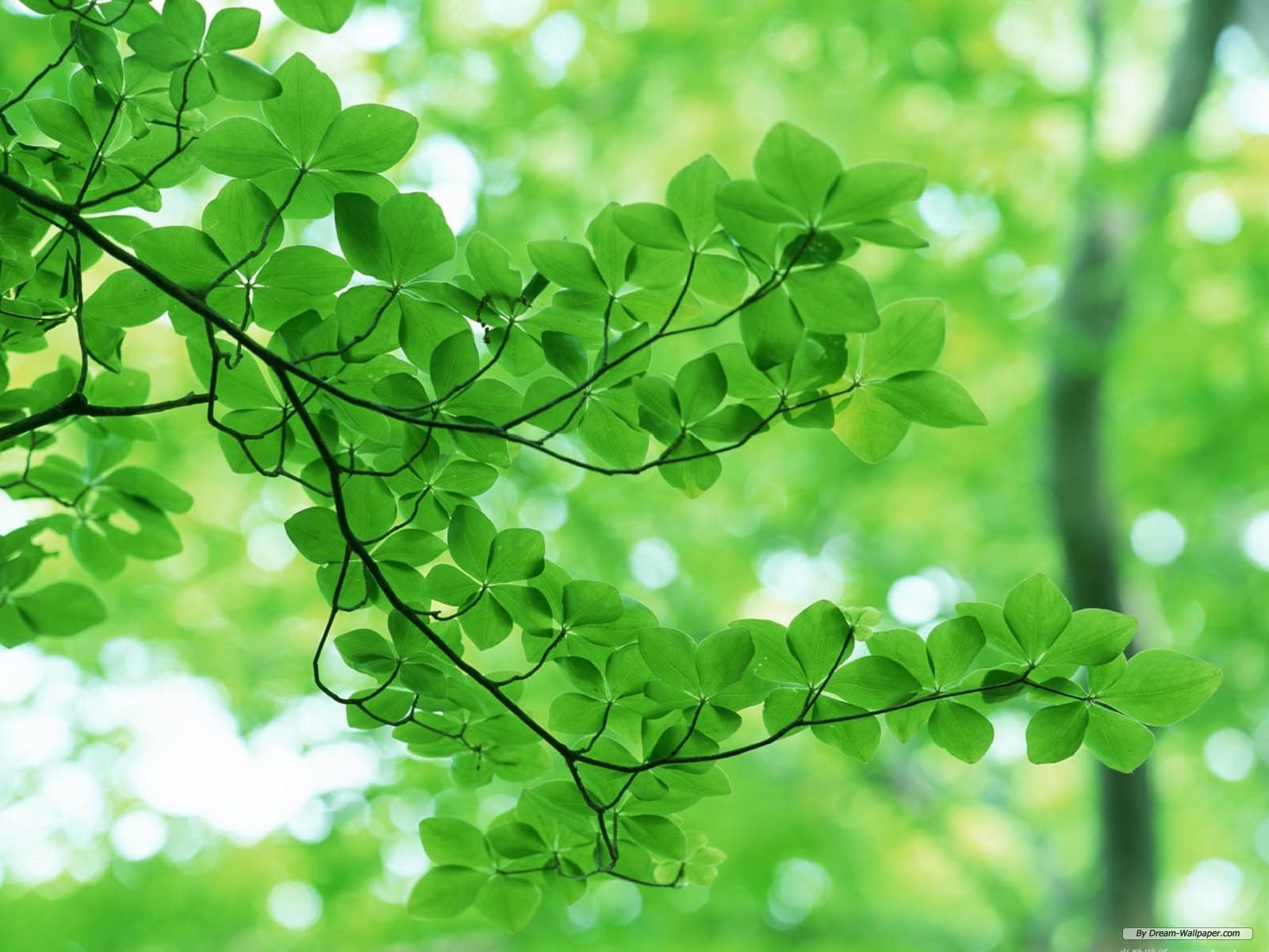 Free Wallpaper - Free Nature wallpaper - Green Leaf 2 wallpaper ...