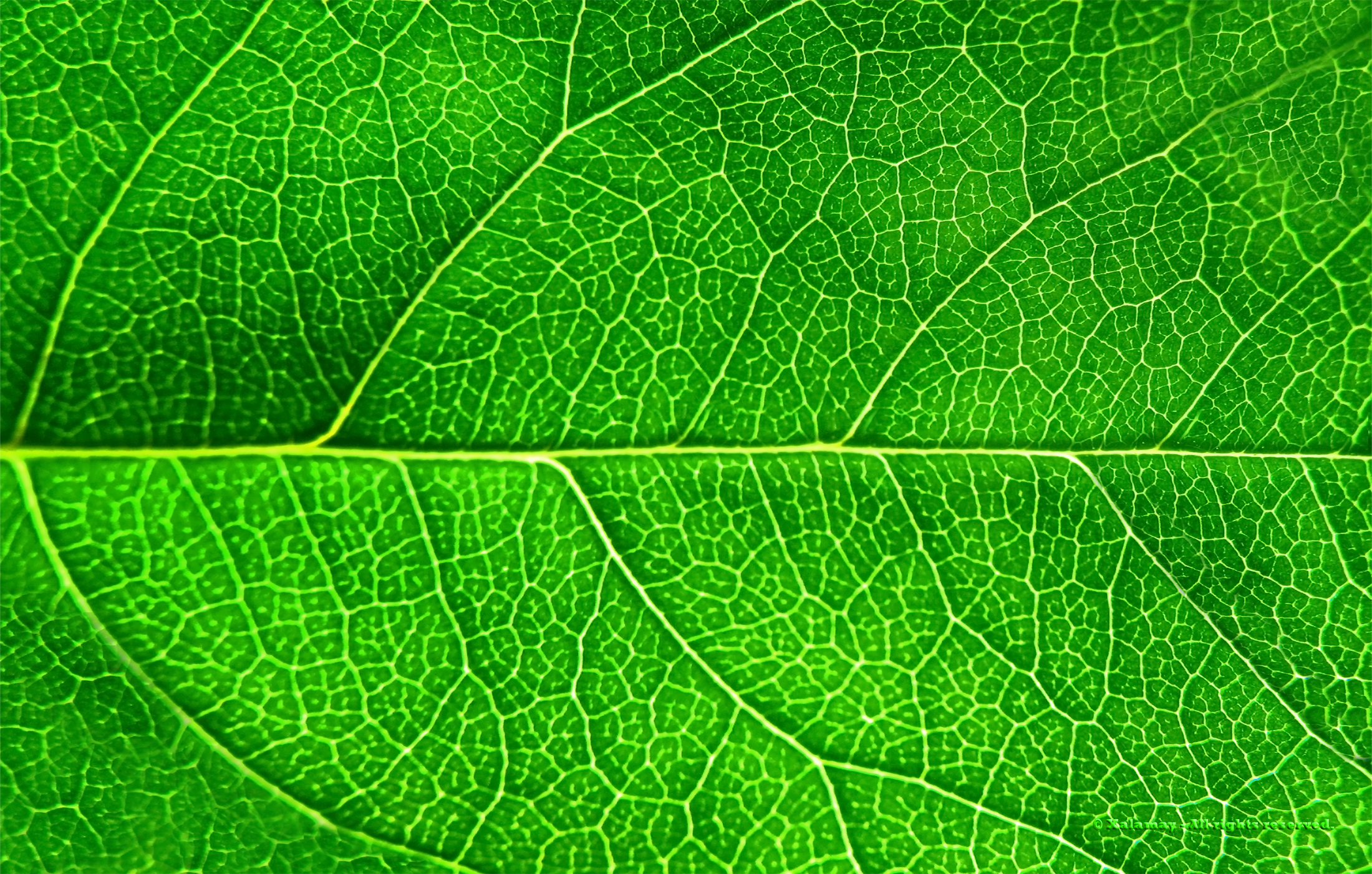 Green Leaf (2200 x 1402) | Free Unique Wallpapers & Backgrounds