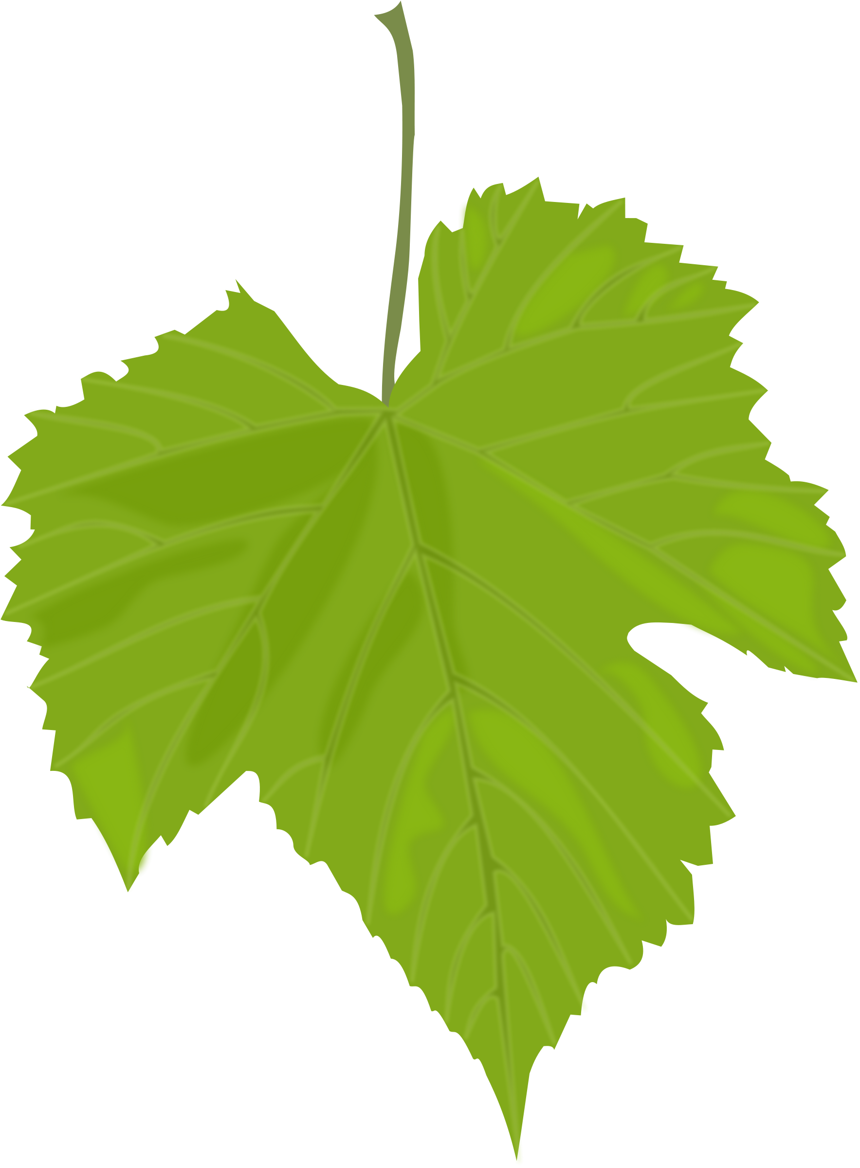 Green leaf PNG | Clipart Panda - Free Clipart Images