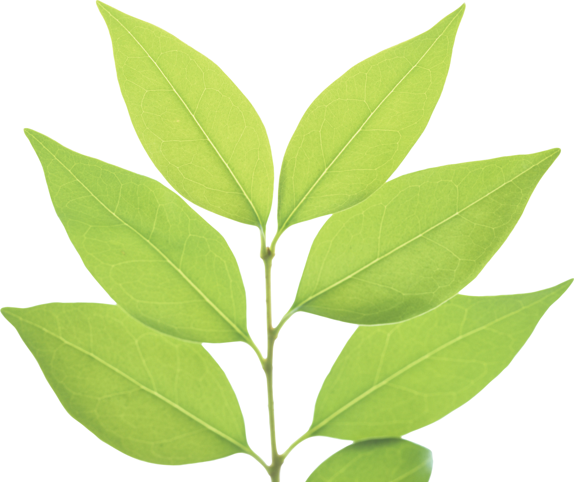 Green Leaves Transparent PNG File | Web Icons PNG