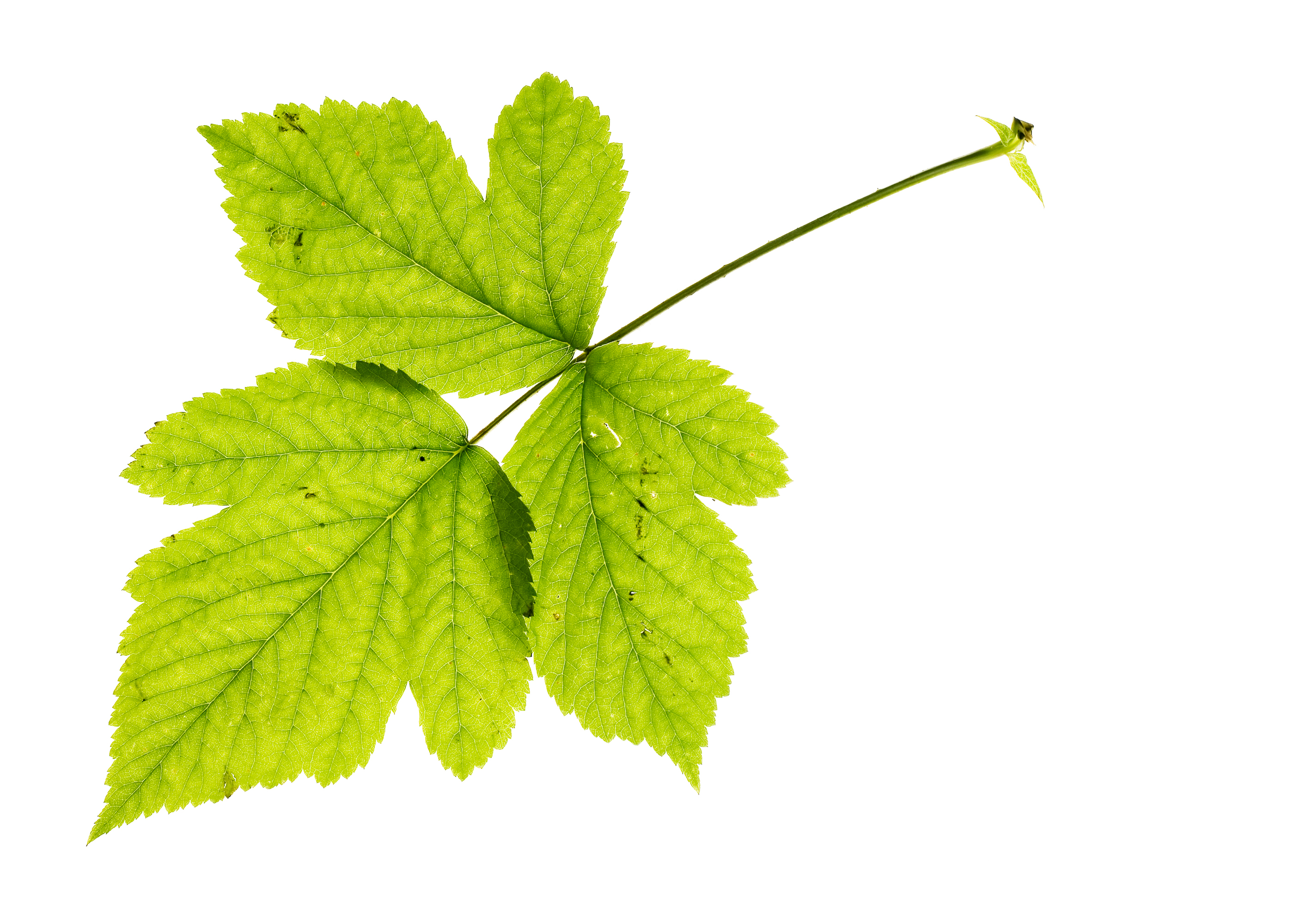 Green leaf, Agriculture, Small, New, Newlife, HQ Photo