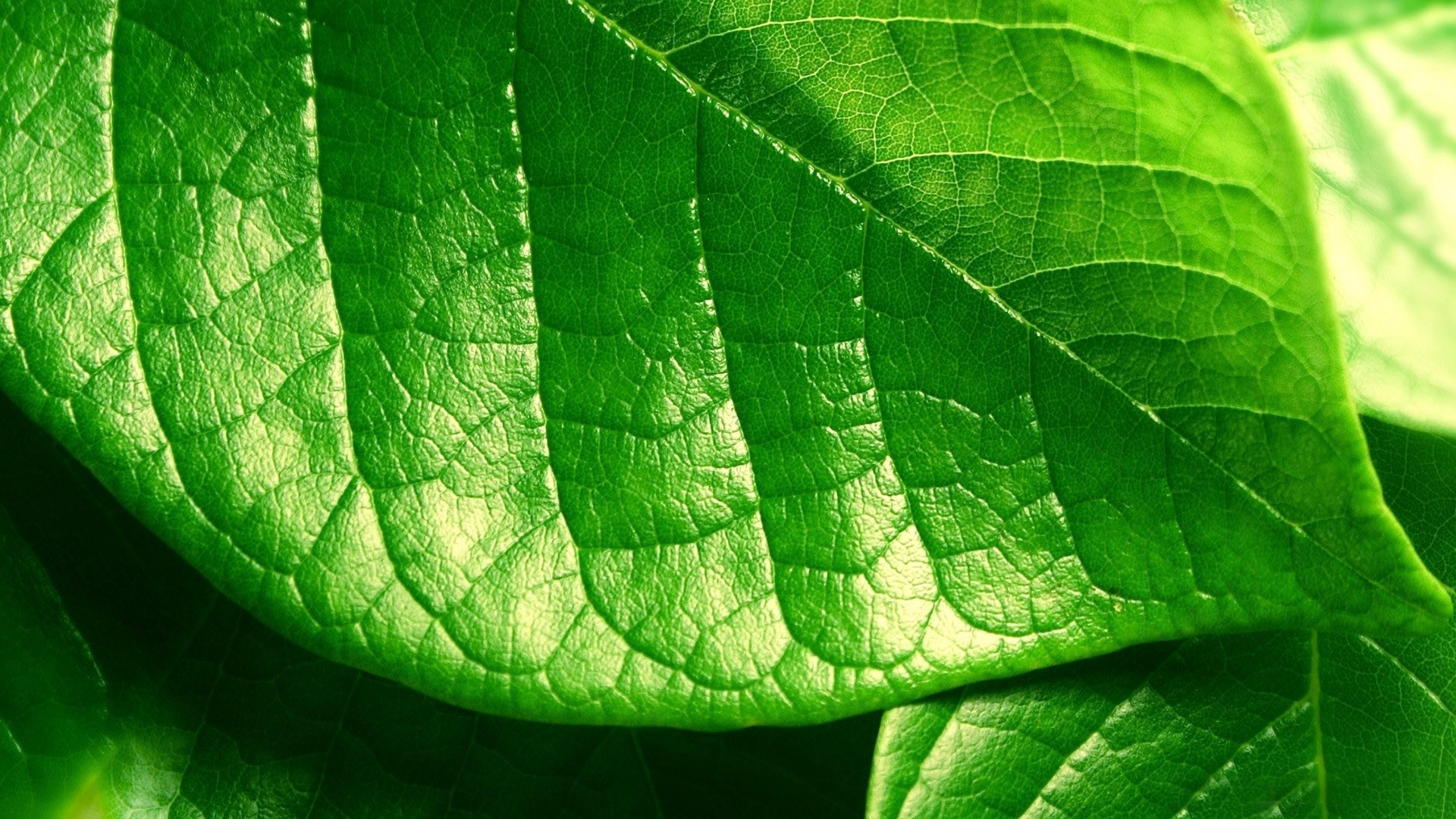 464032 Green Leaf Wallpapers