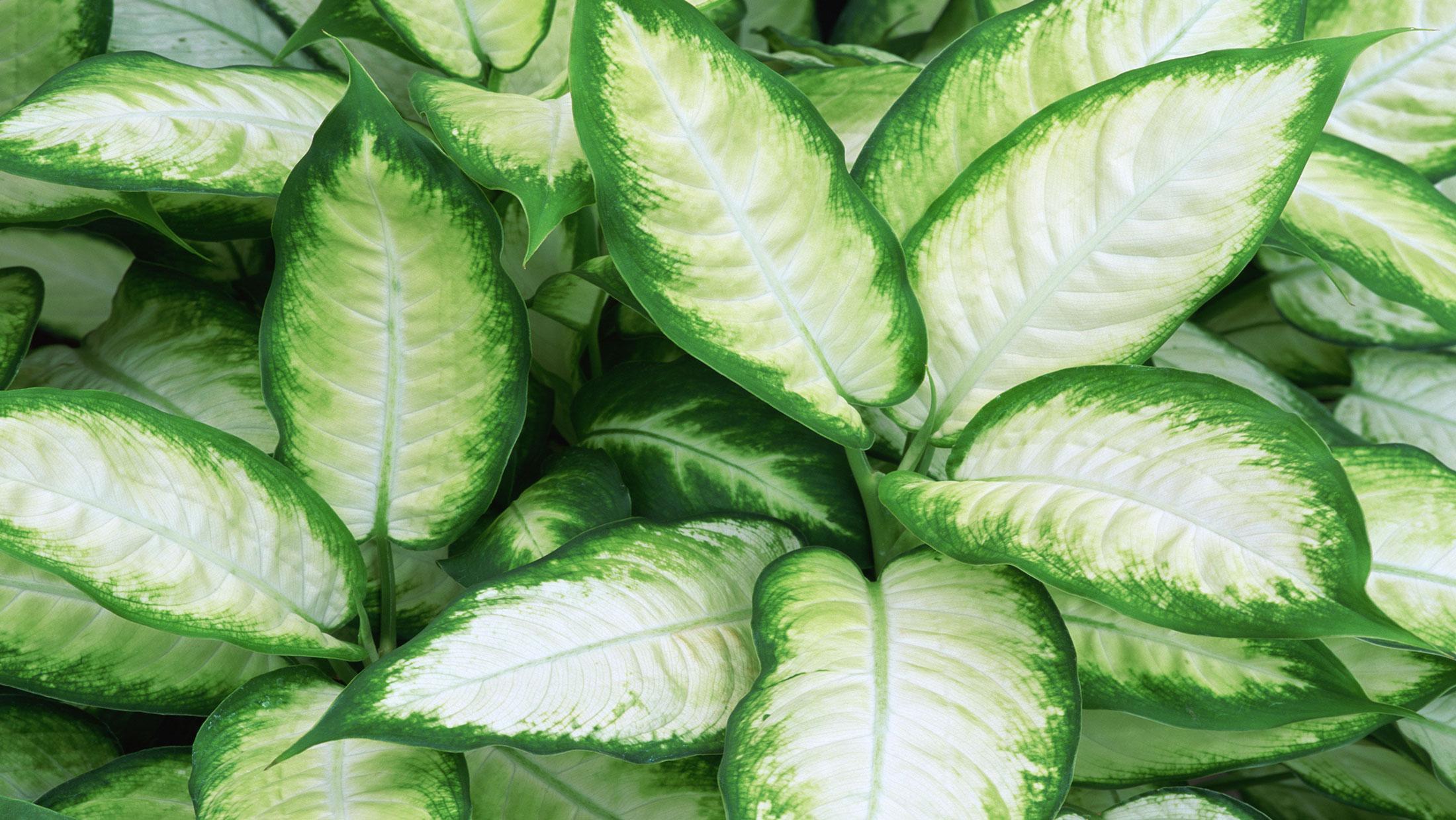 Homelife - Top 15 indoor plants