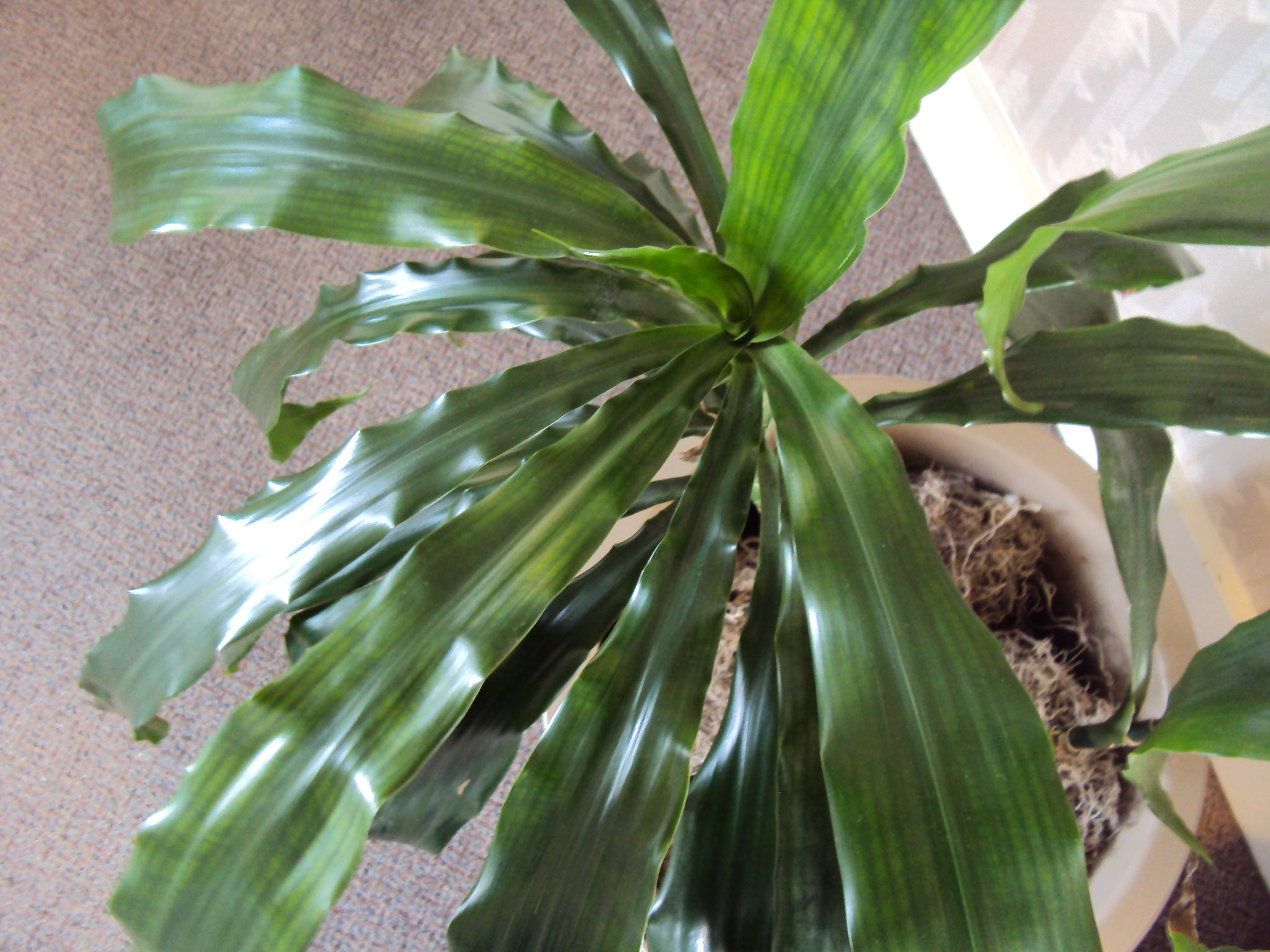 Wednesday – The Plant Lady Chronicles] How to Clean and Shine ...