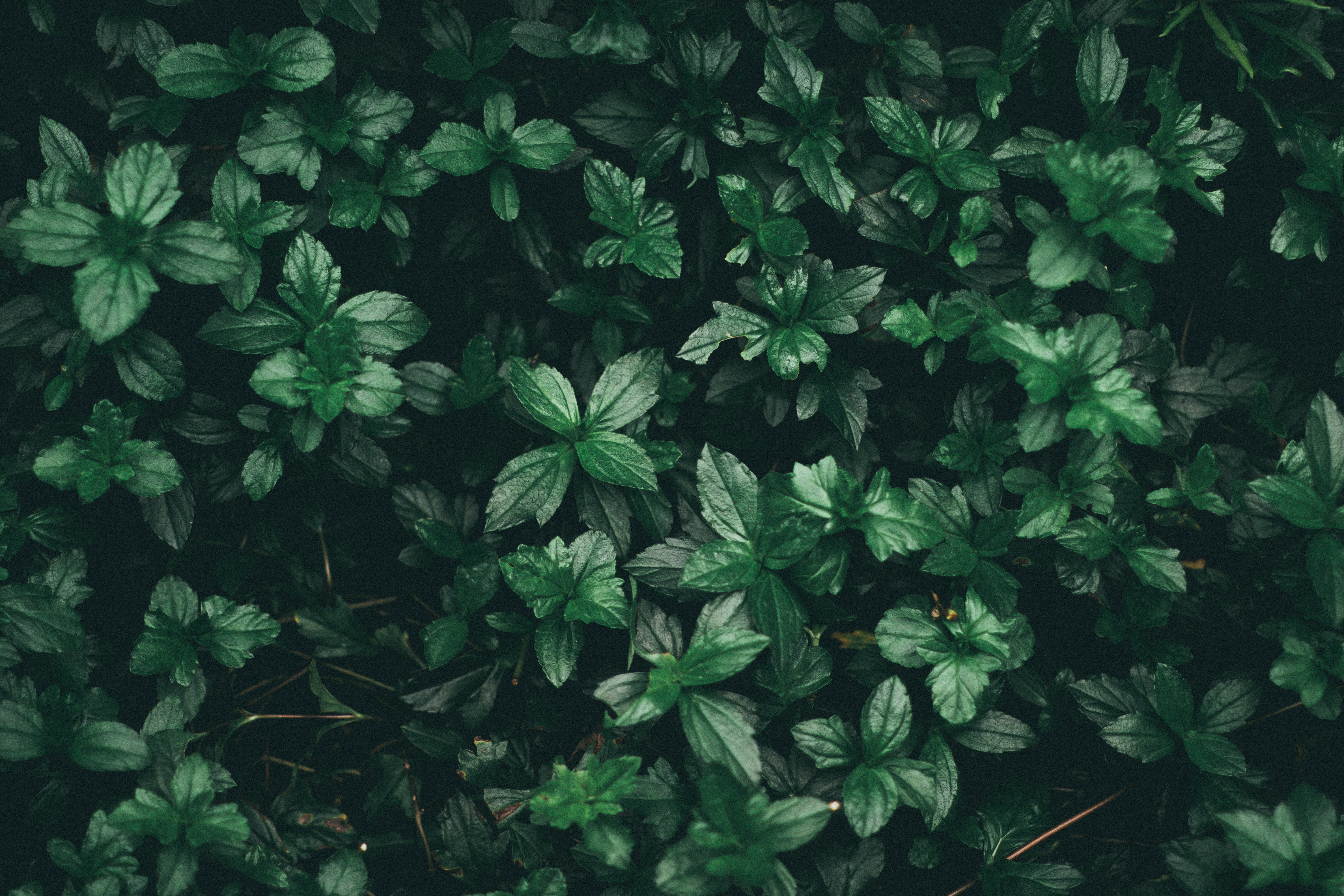 Free Photo Green Leaf Plant Close Up Color Dark Green Free