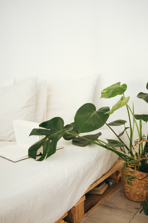 Green leaf plant in brown pot inside room photo