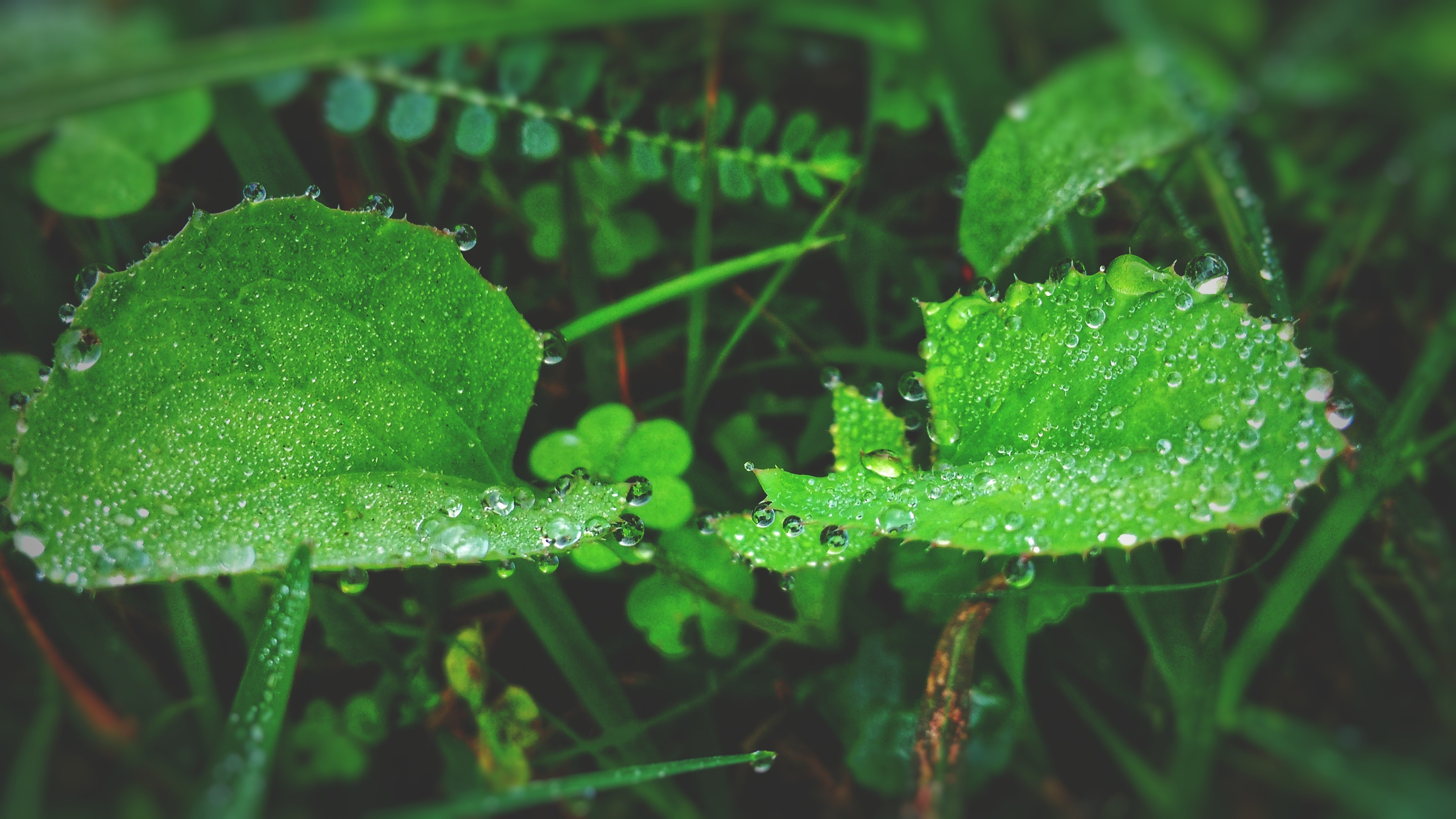Green Leaf Plant With Raindrops Photo