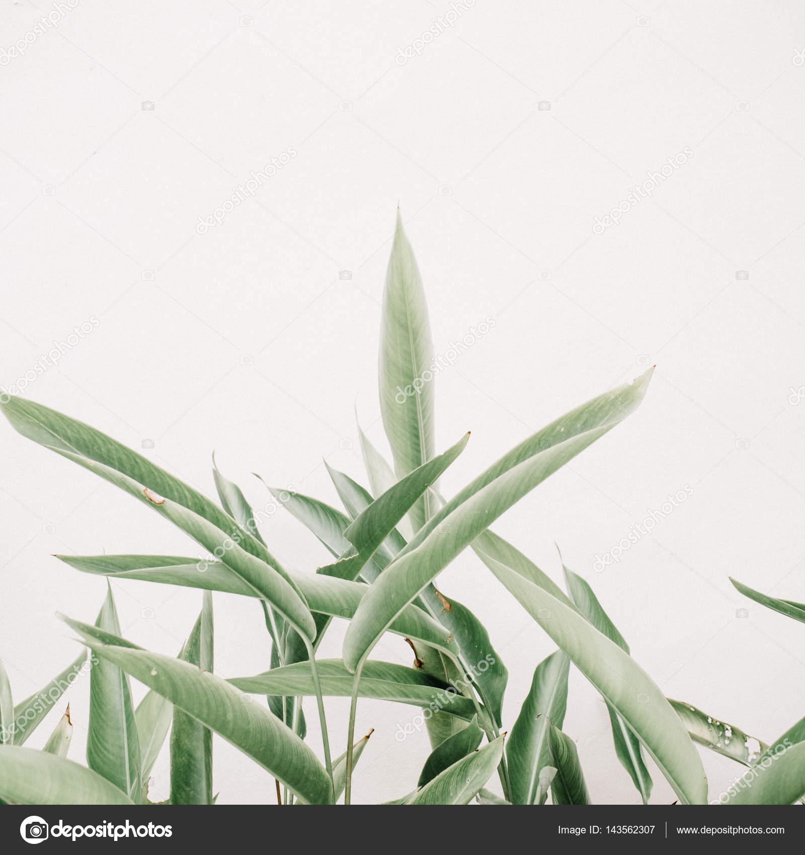 Green leaf plants — Stock Photo © maximleshkovich #143562307