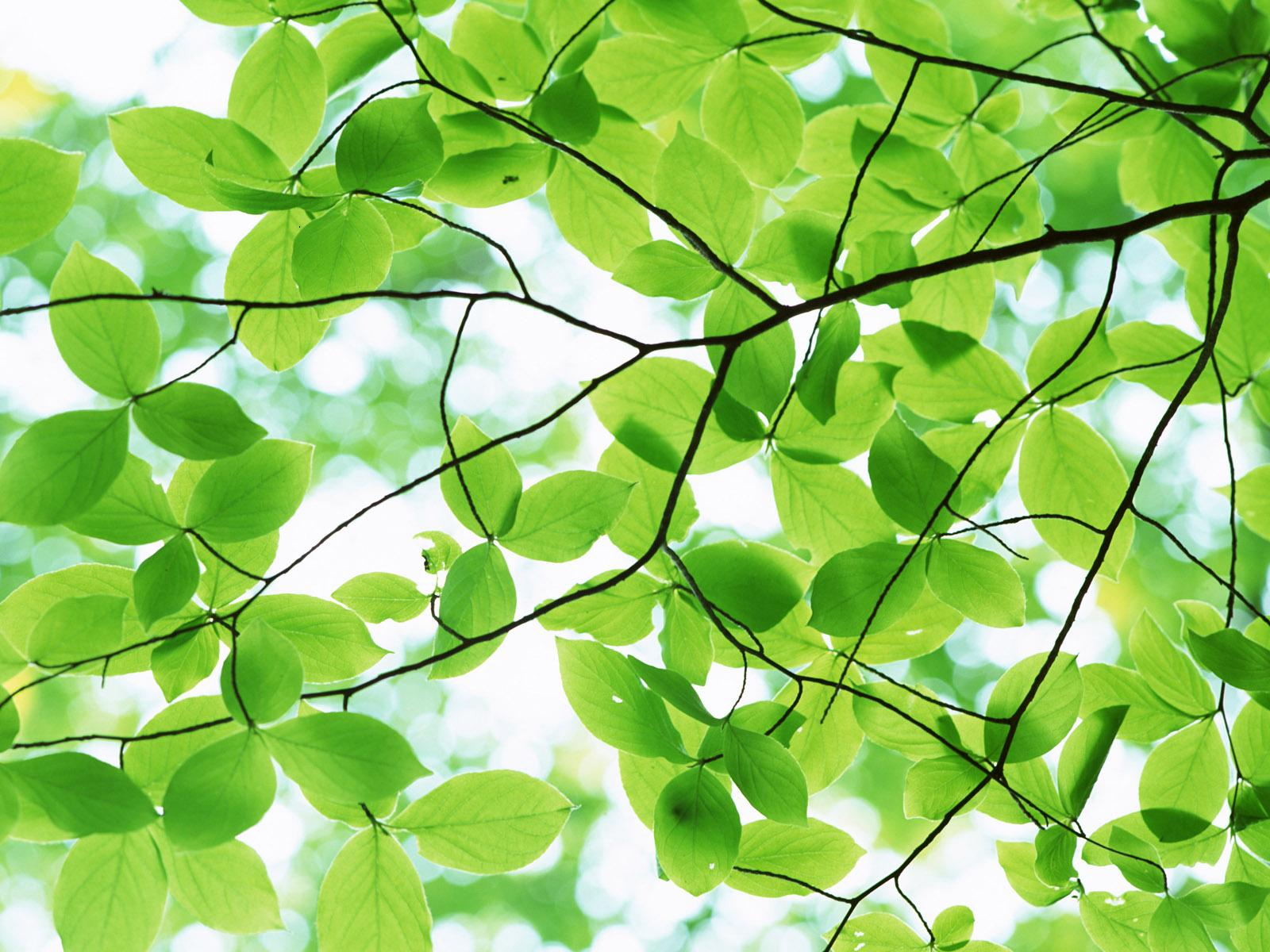 bark-of-a-tree-pleasant-green-leaves-desktop-backgrounds-pictures.jpg