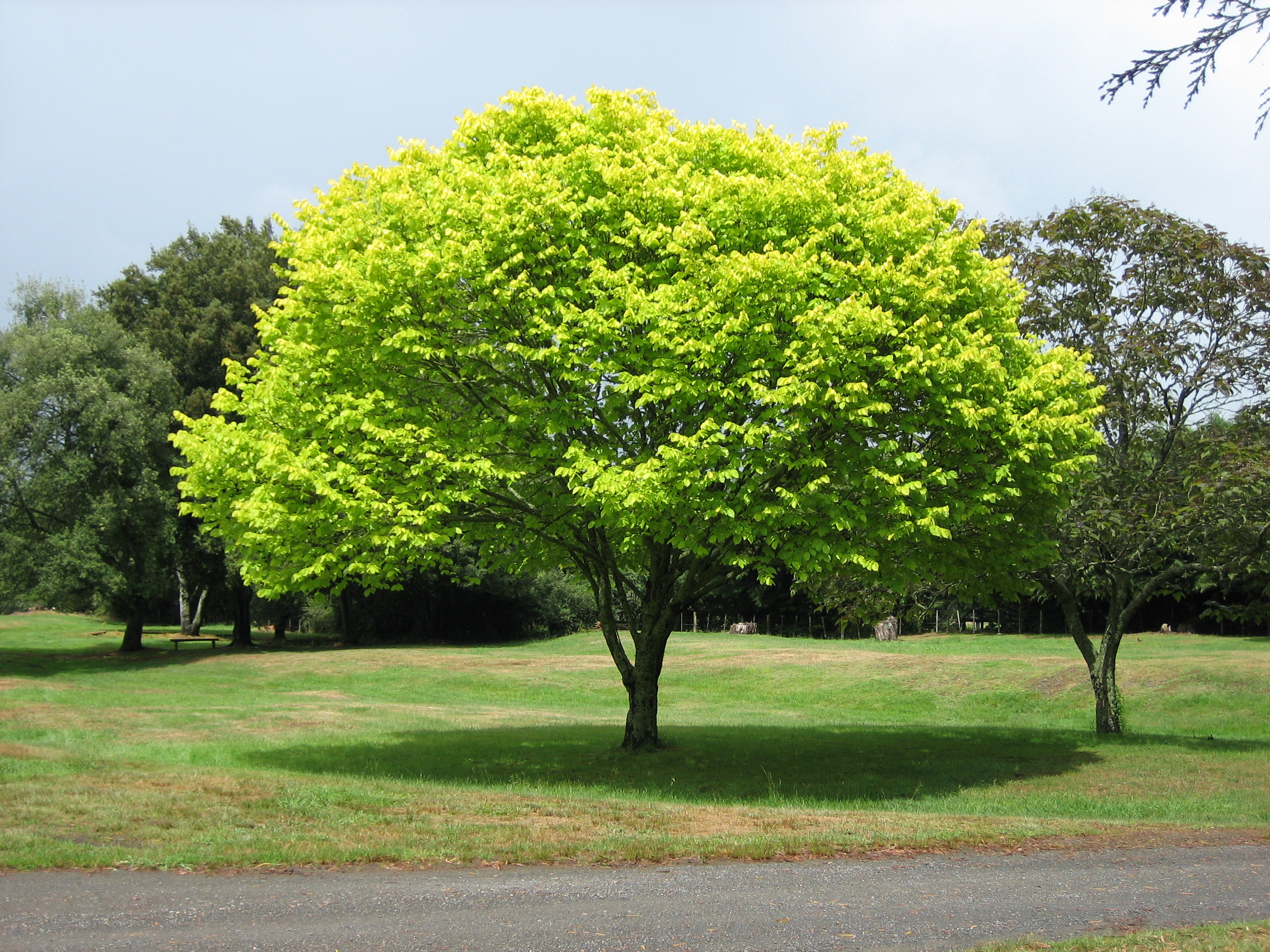 Green tree photo