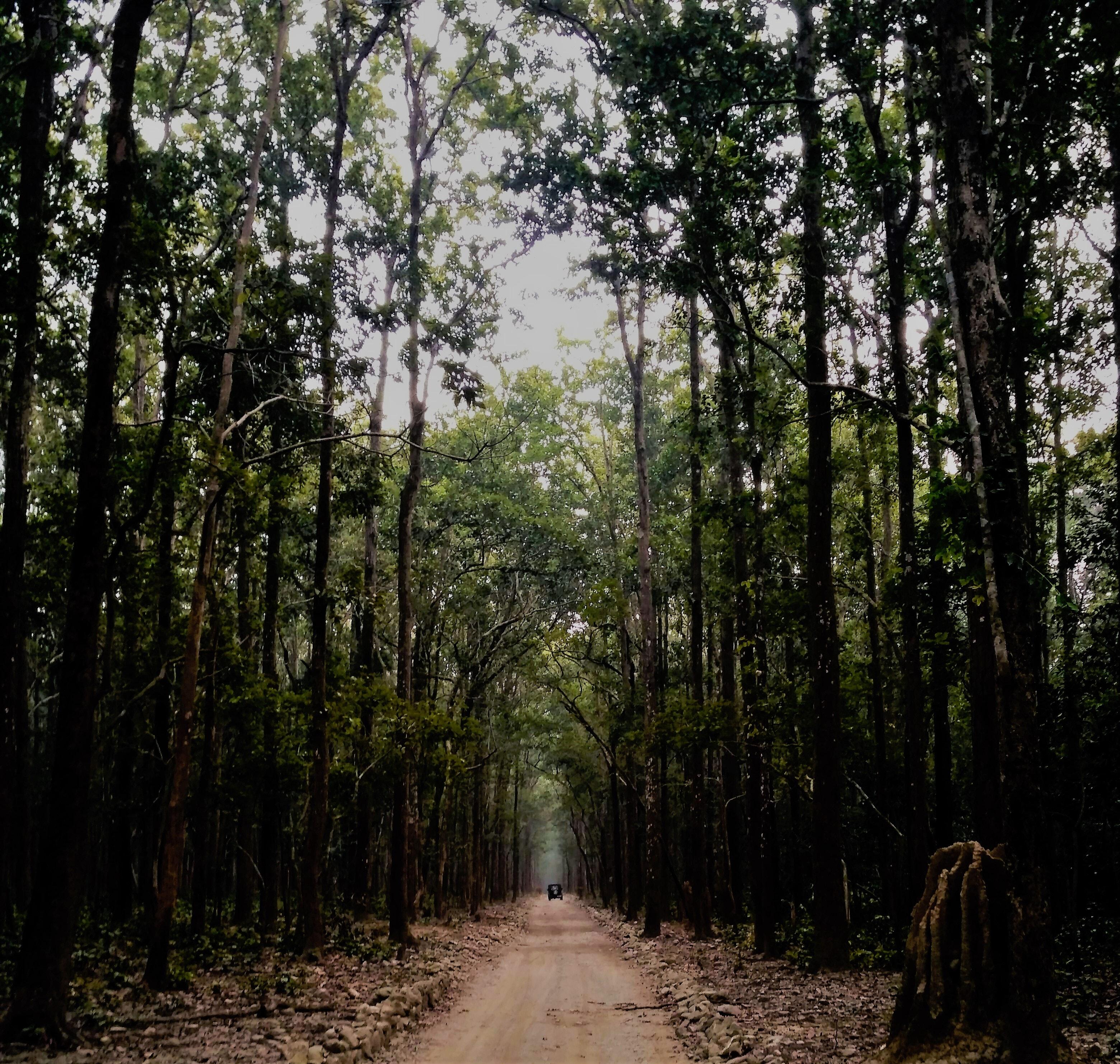 Green Leaf Trees, Car, Daylight, Dirt road, Environment, HQ Photo