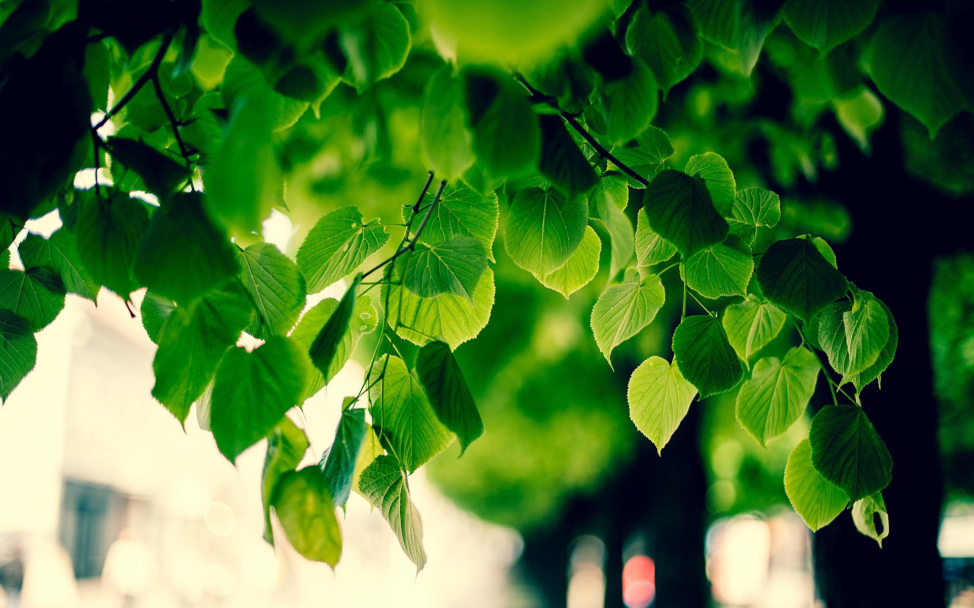 Green Tree Foliage HD Desktop Wallpaper, Instagram photo, Background ...