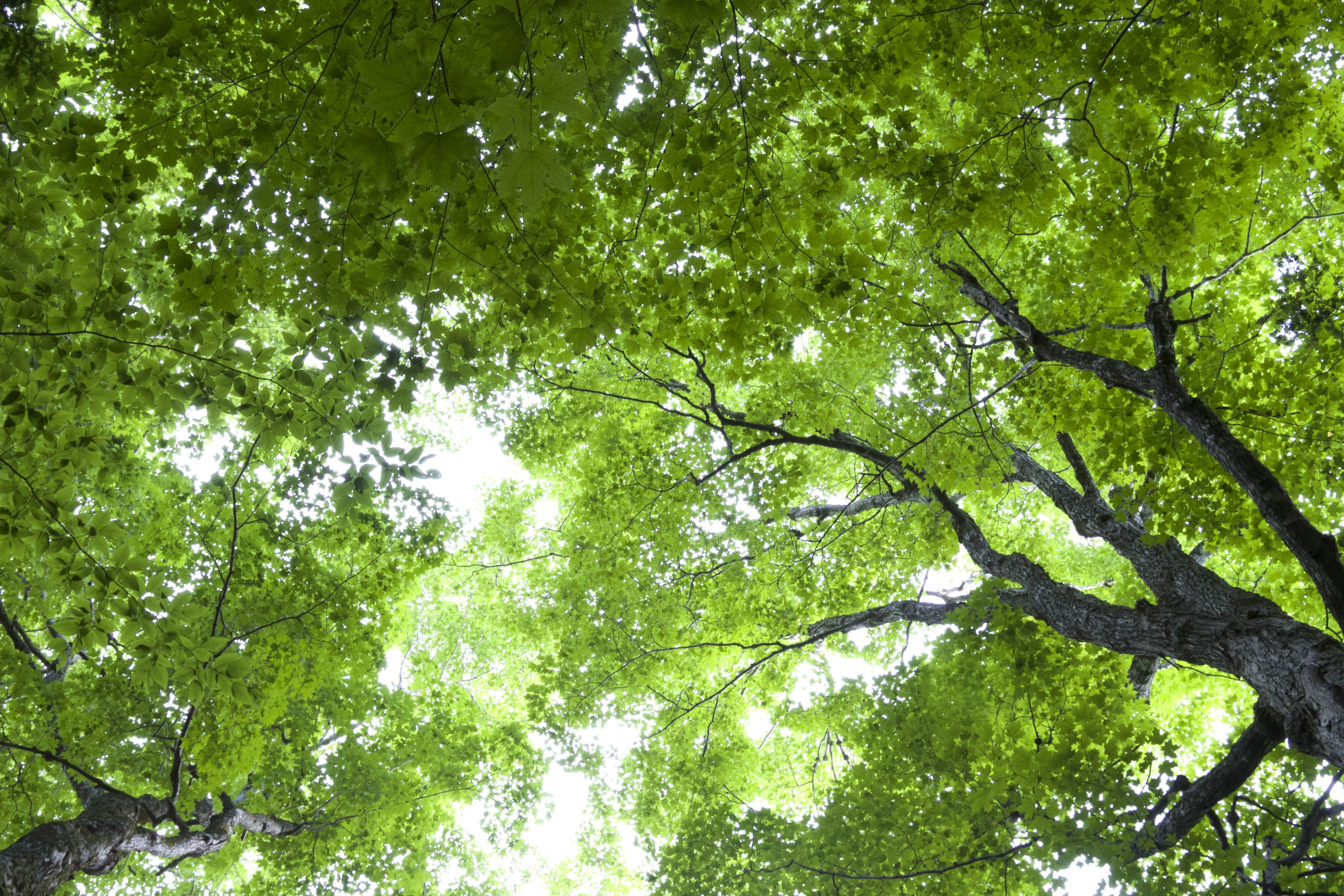 Free photo: Green Trees - Trees, Nature, Green - Free ...