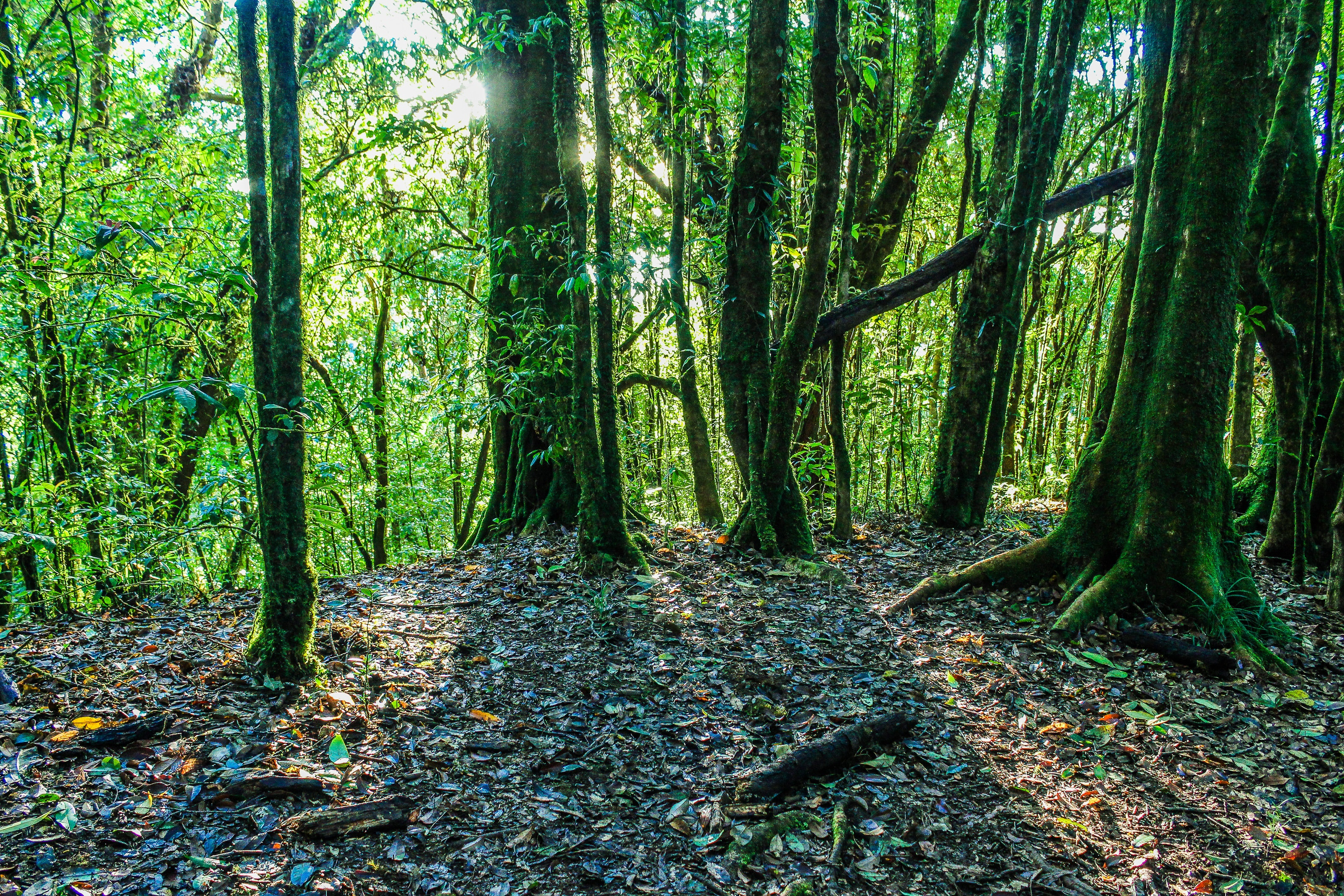 Green leaf trees photo