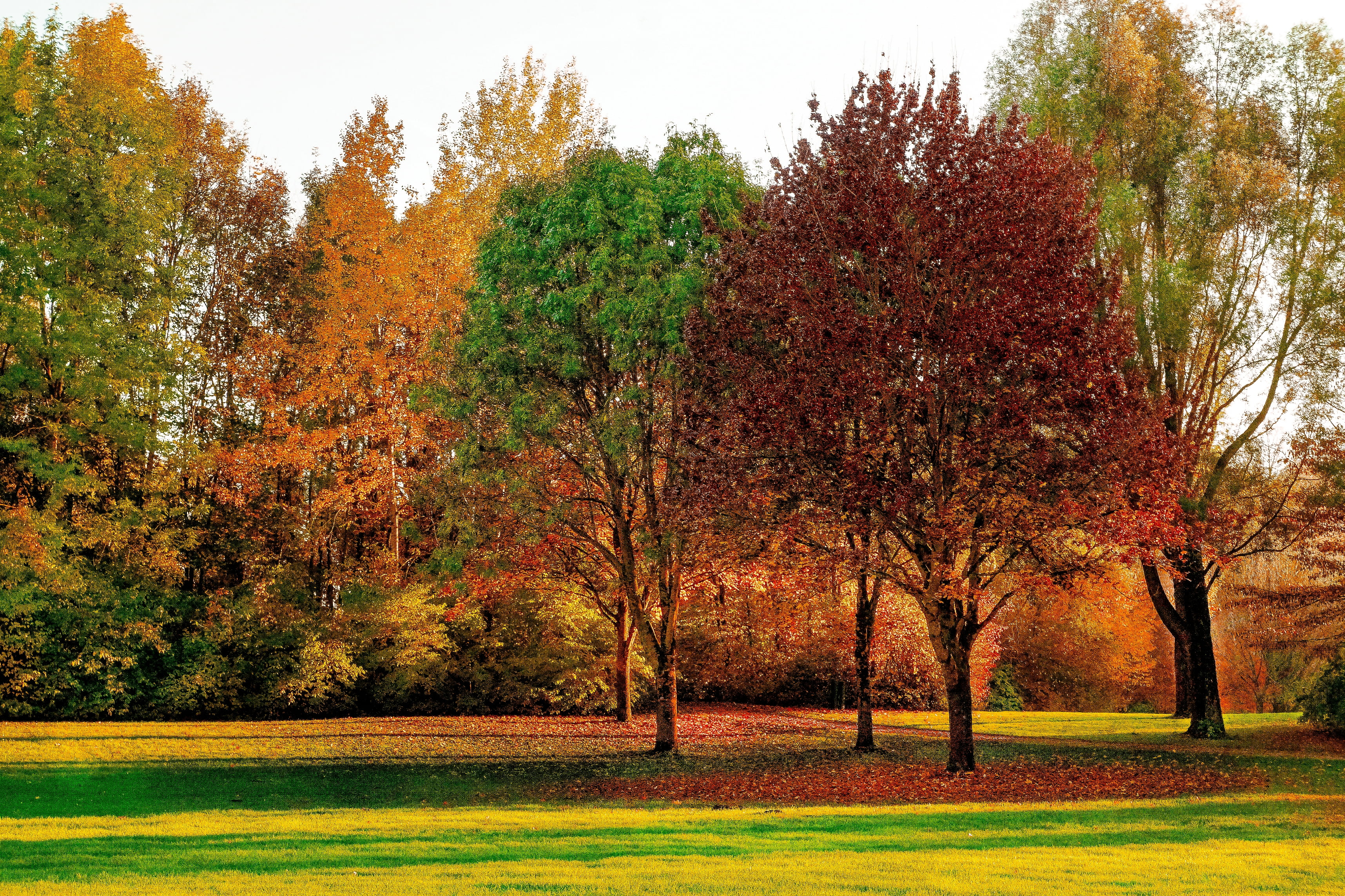 Red, yellow and green leaf trees HD wallpaper | Wallpaper Flare
