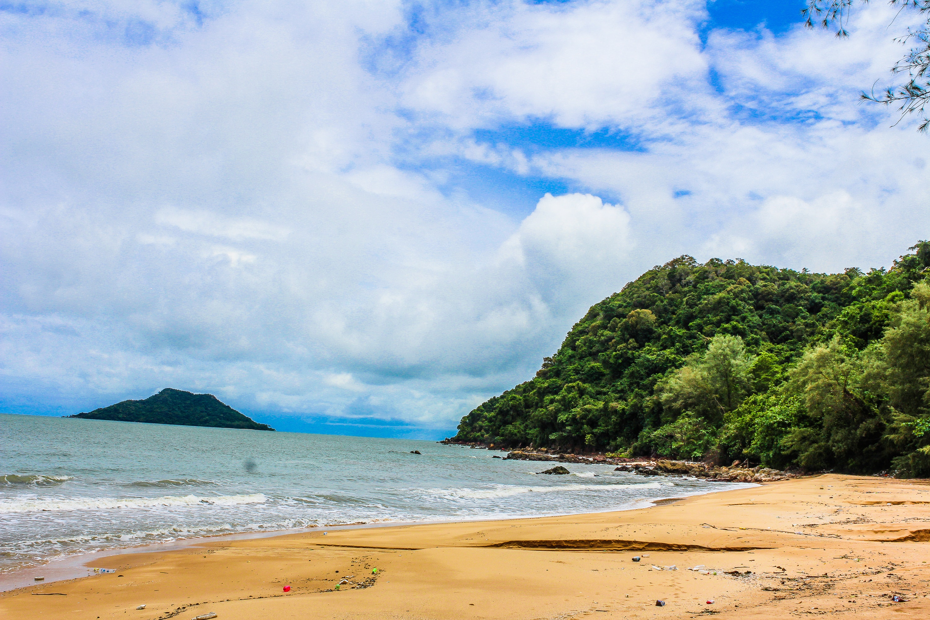 Green Leaf Trees Beside Body of Water, Beach, Scenic, Water, View, HQ Photo