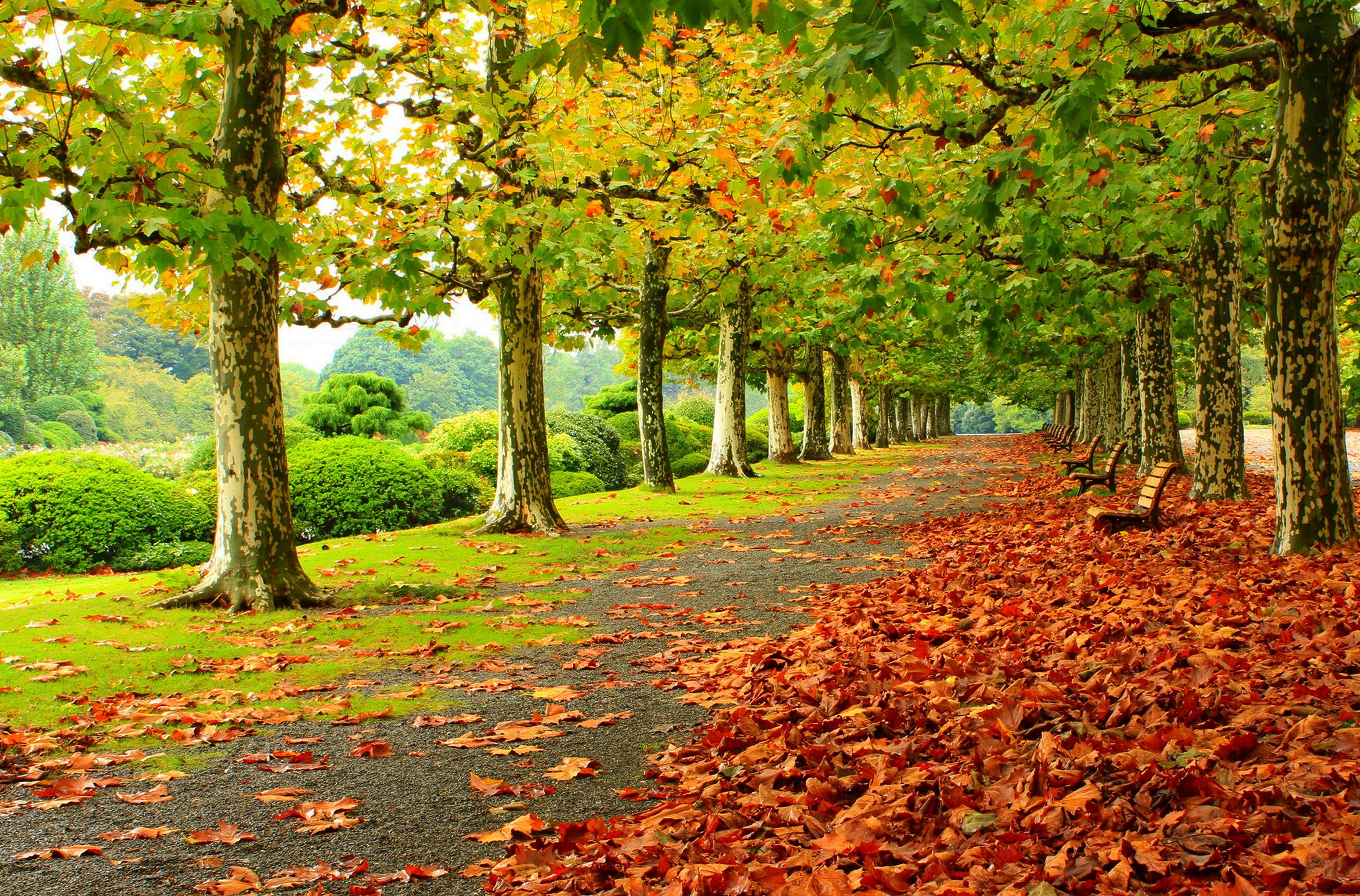 Photo of dried leaves near green leaf trees and benches HD wallpaper ...