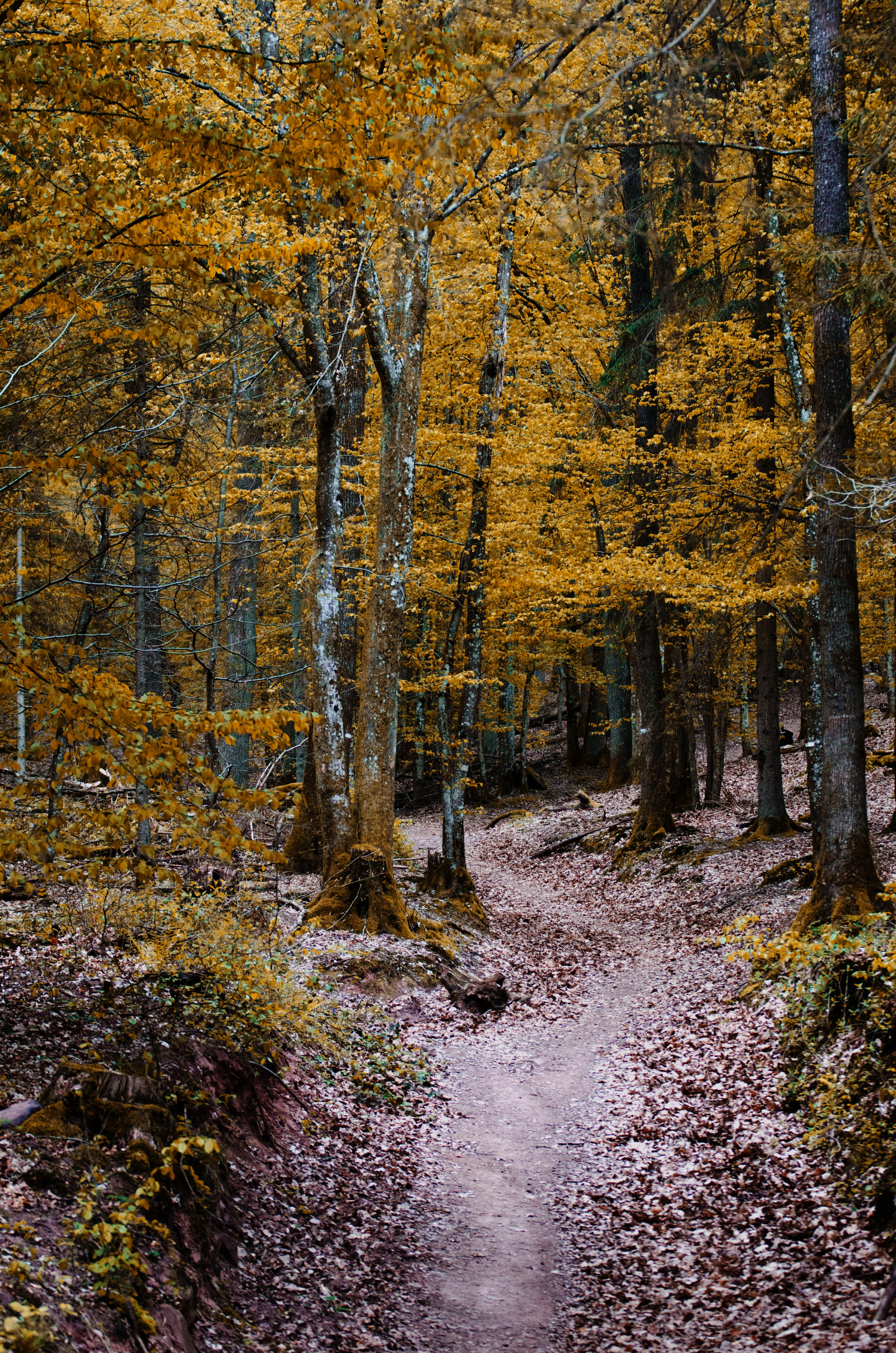 Green Leaved Trees, Branches, Pathway, Trees, Tree trunks, HQ Photo